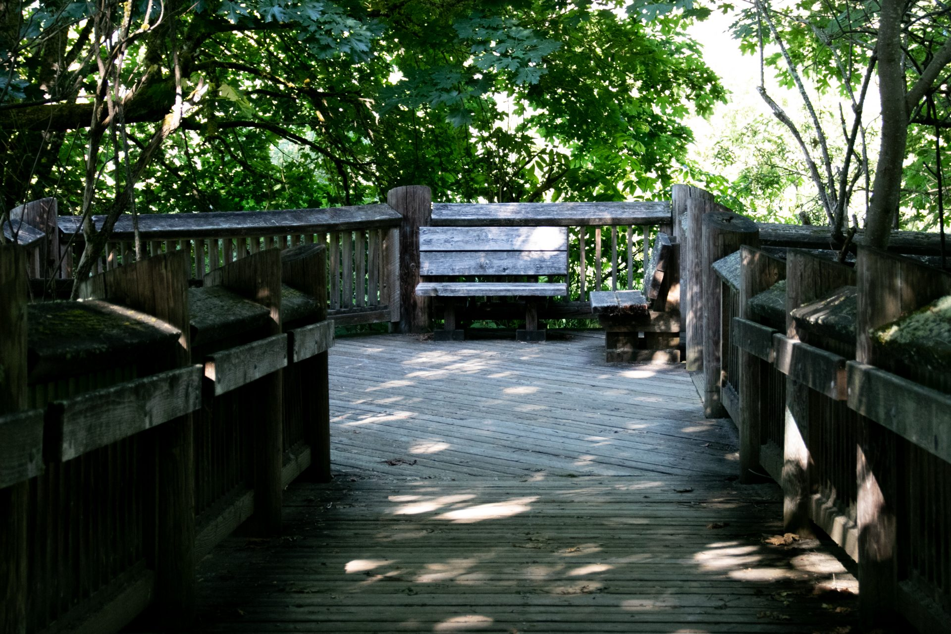 Wooden Benches On Boardwalk Under Trees