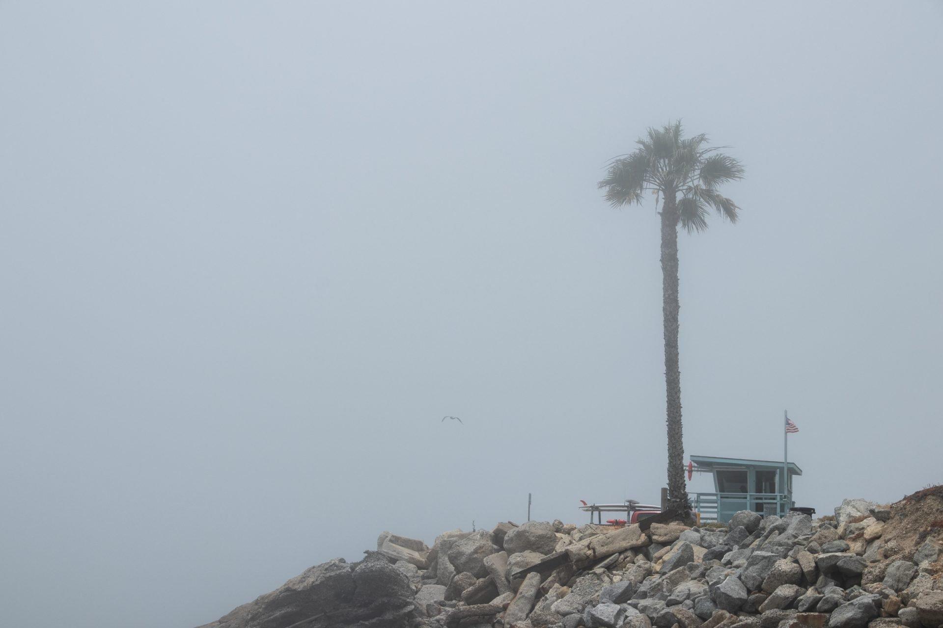 Single Palm Tree Near Rocks