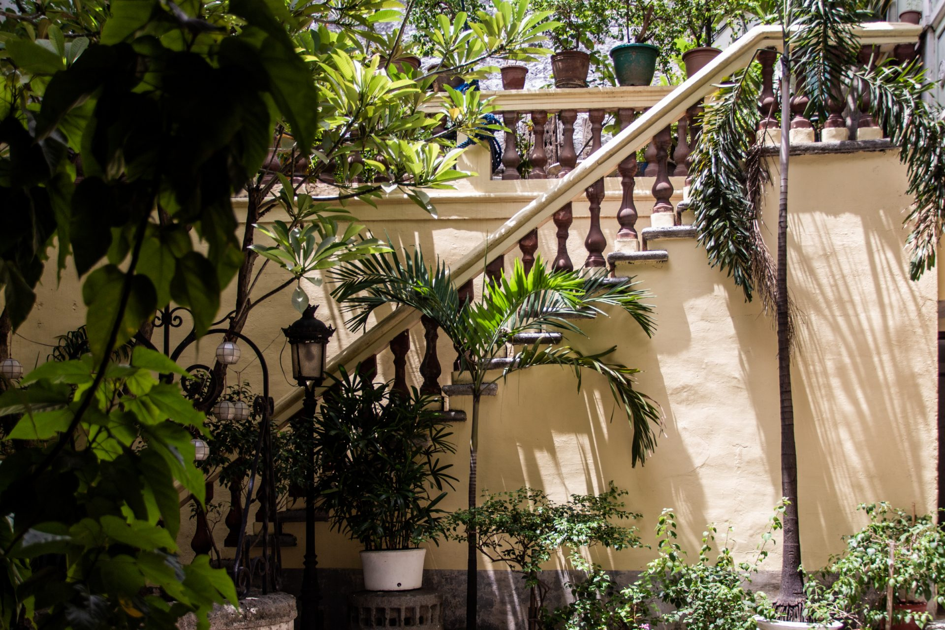 Staircase With Banister Surrounded By Plants