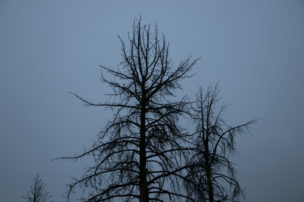 Tall Bare Trees Against Sky