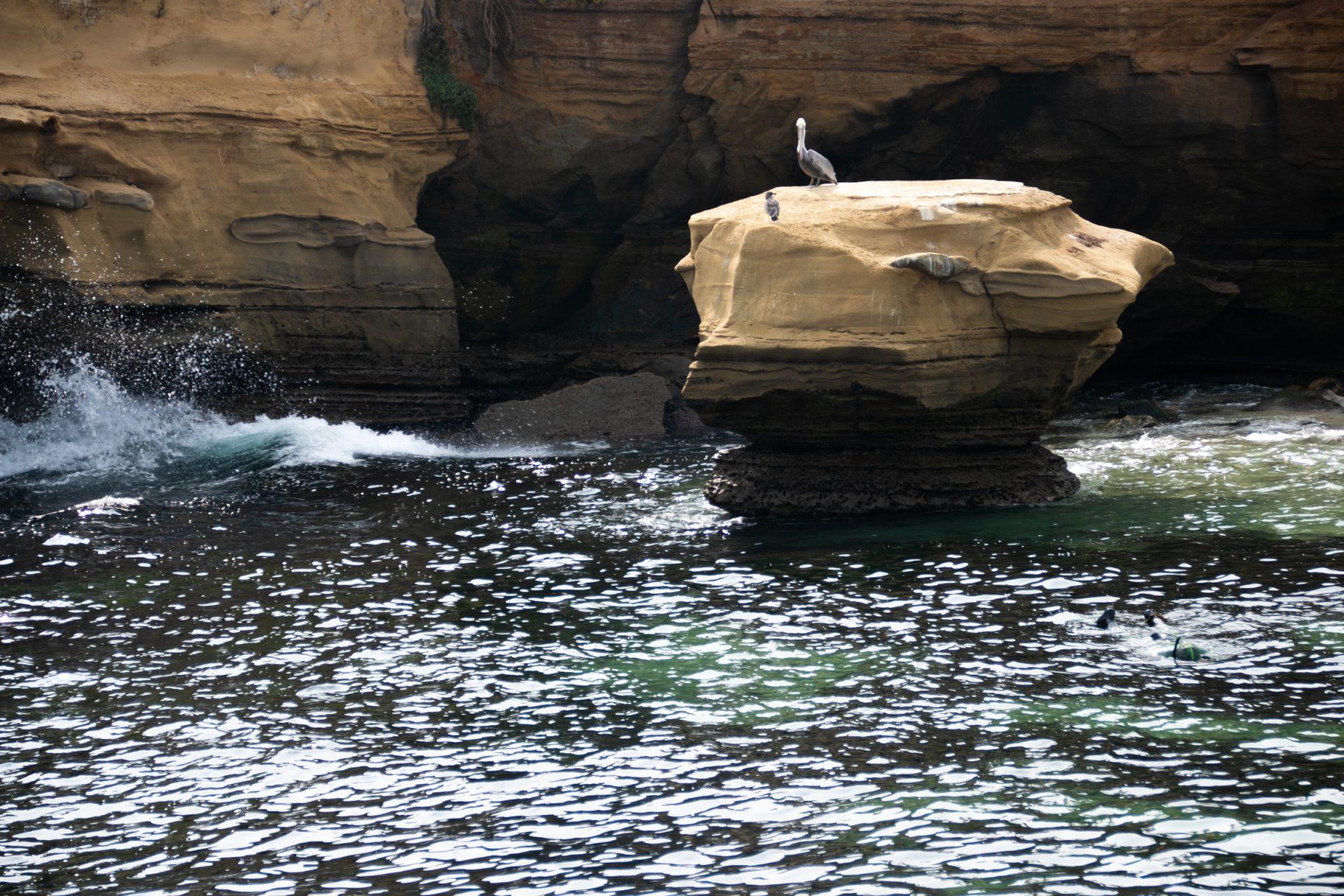 Birds On Rock In Water