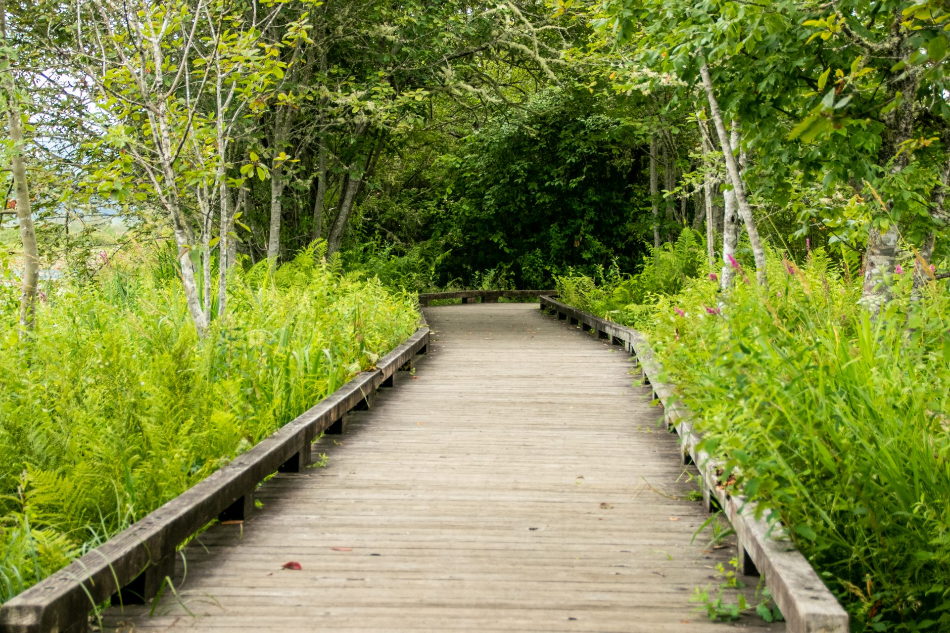 Boardwalk With Low Railing Between Trees