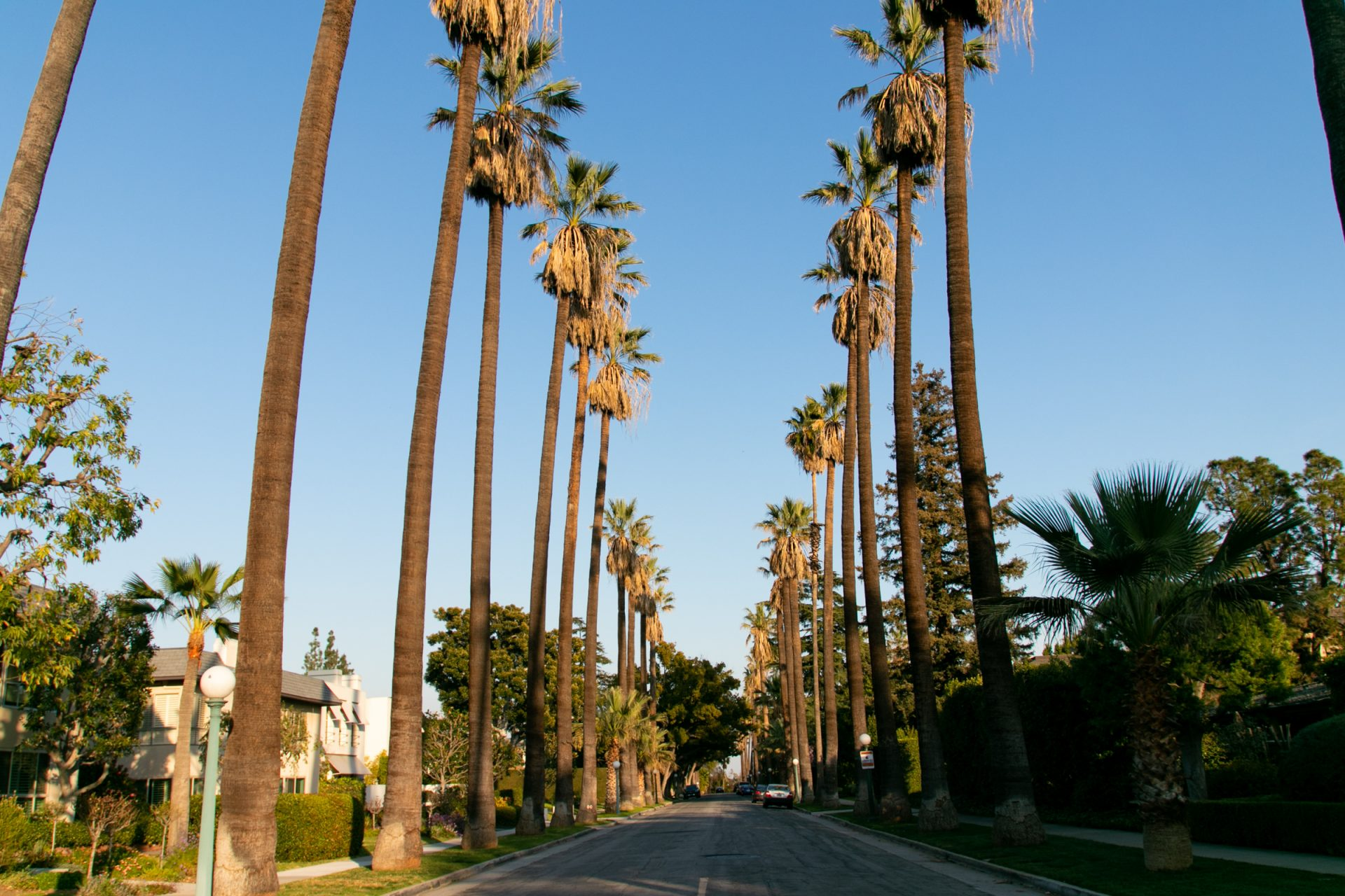 Empty Palm Tree Lined Paved Road
