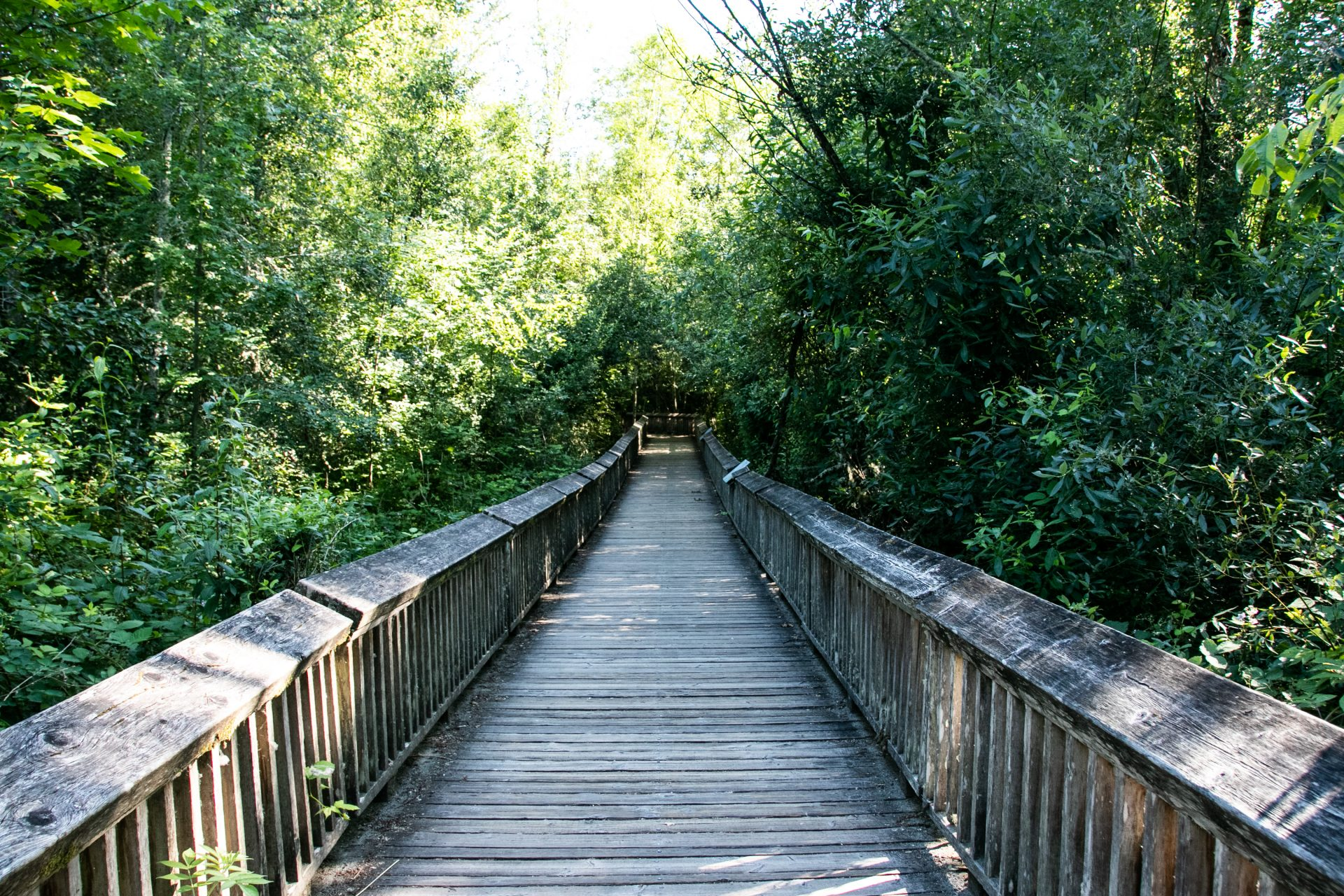 Long Boardwalk Through Woods