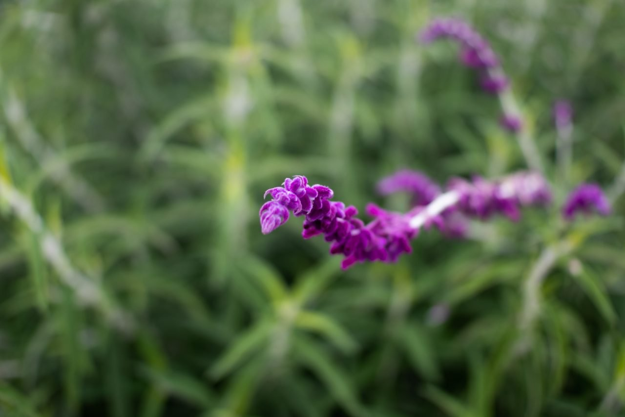 Plant Spike With Small Purple Petals