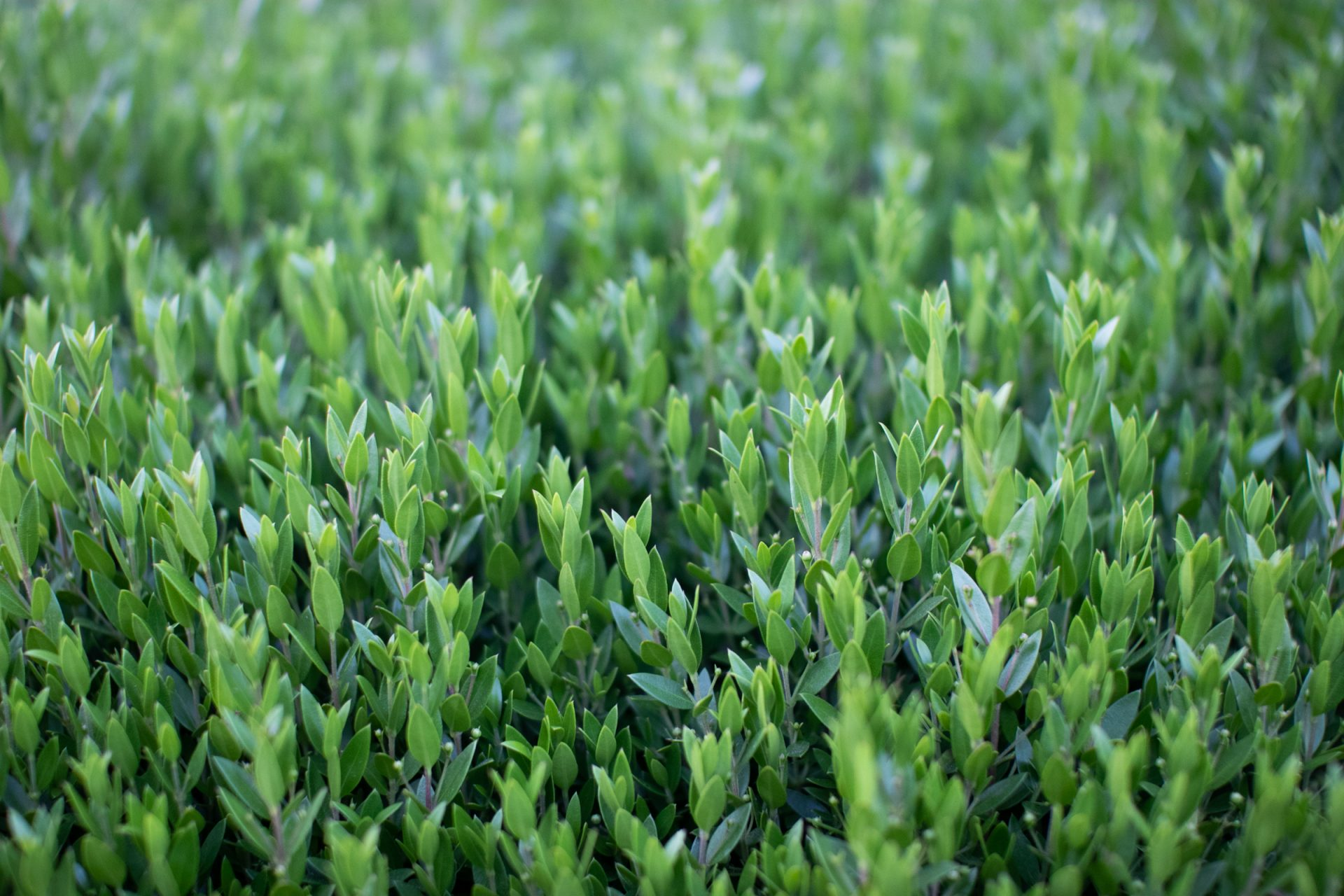 Small Light Green Plants