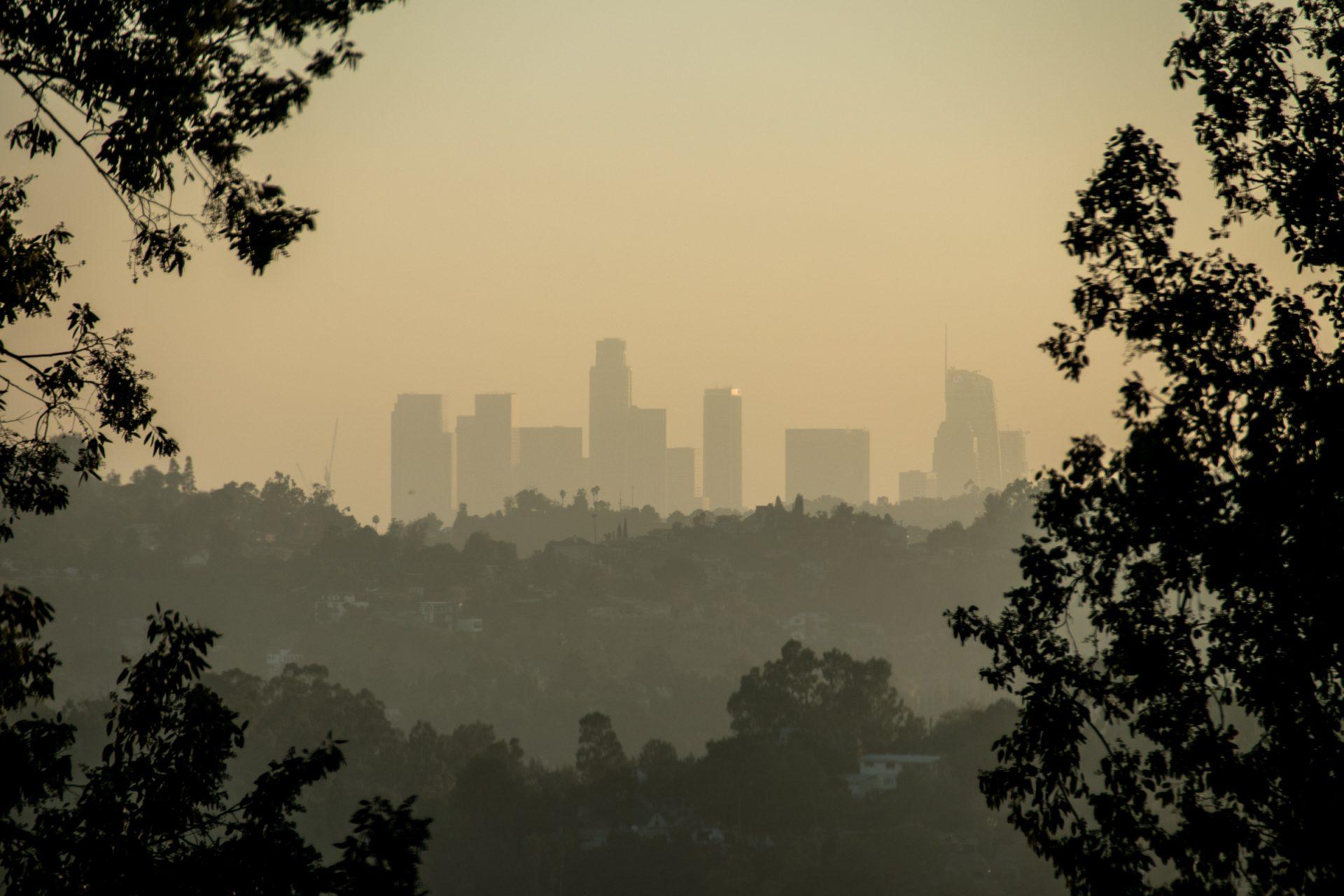 City Skyline Behind Trees In Haze