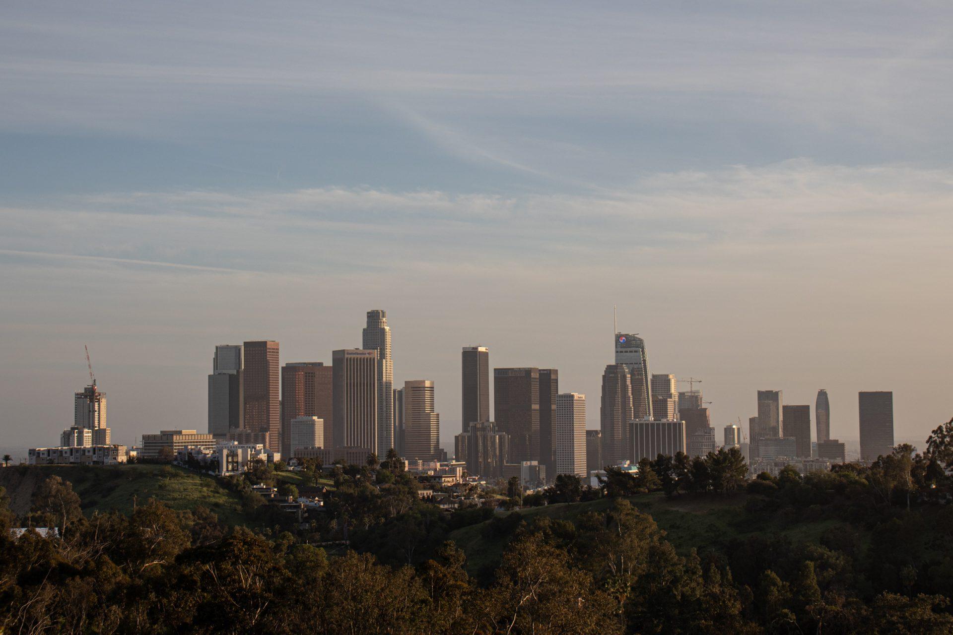 City Skyline Beyond Trees
