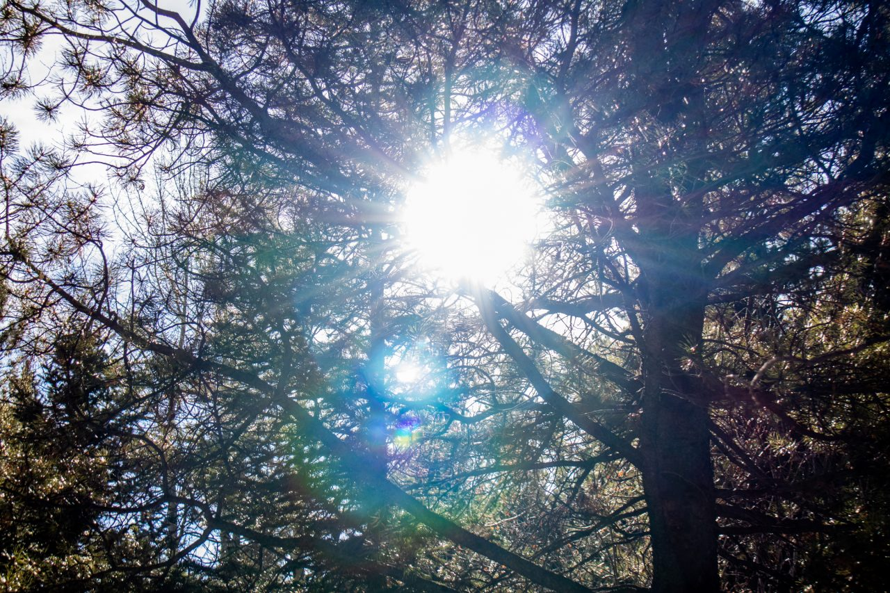 Sun Shining Through Intertwined Tree Branches