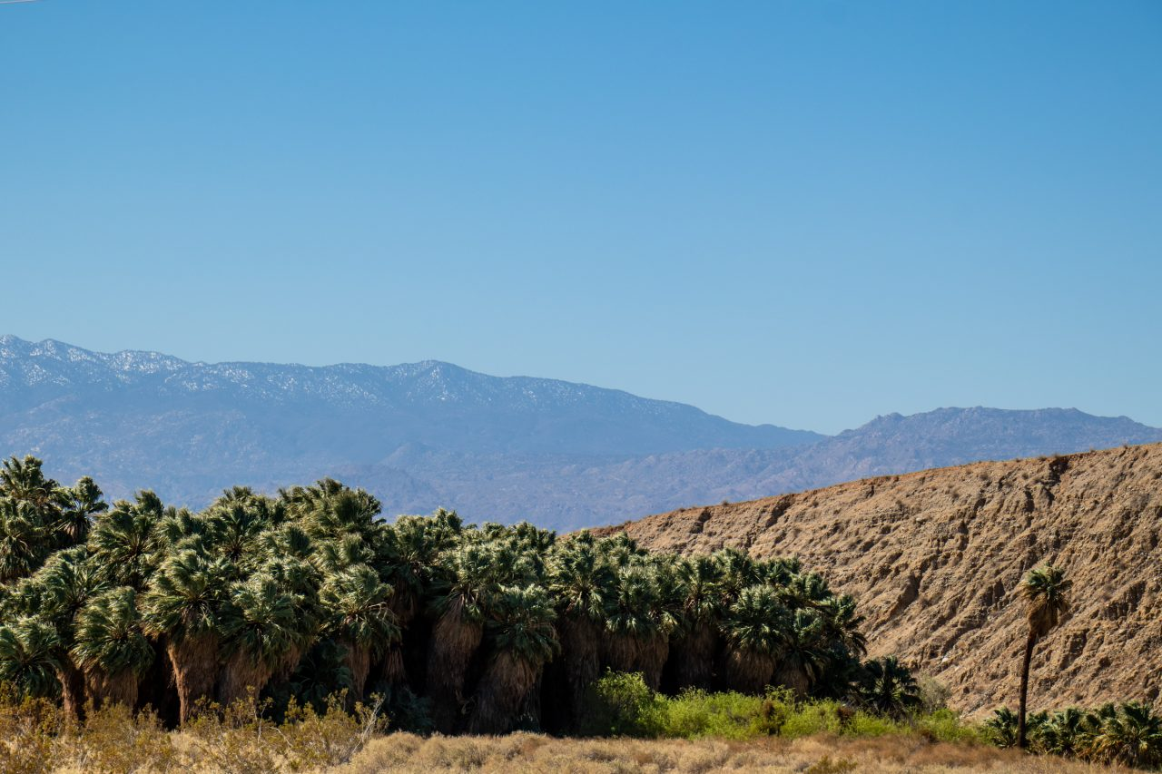 Cluster Of Palm Trees Near Hills