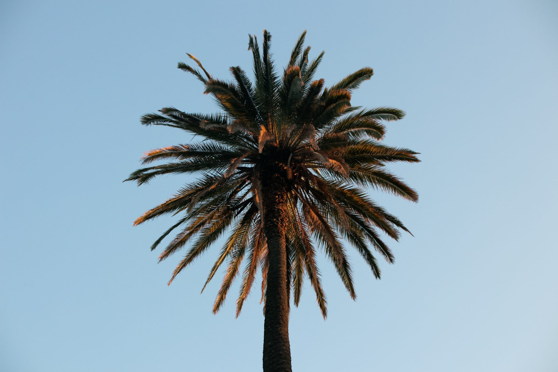 Palm Tree Crown Against Clear Sky