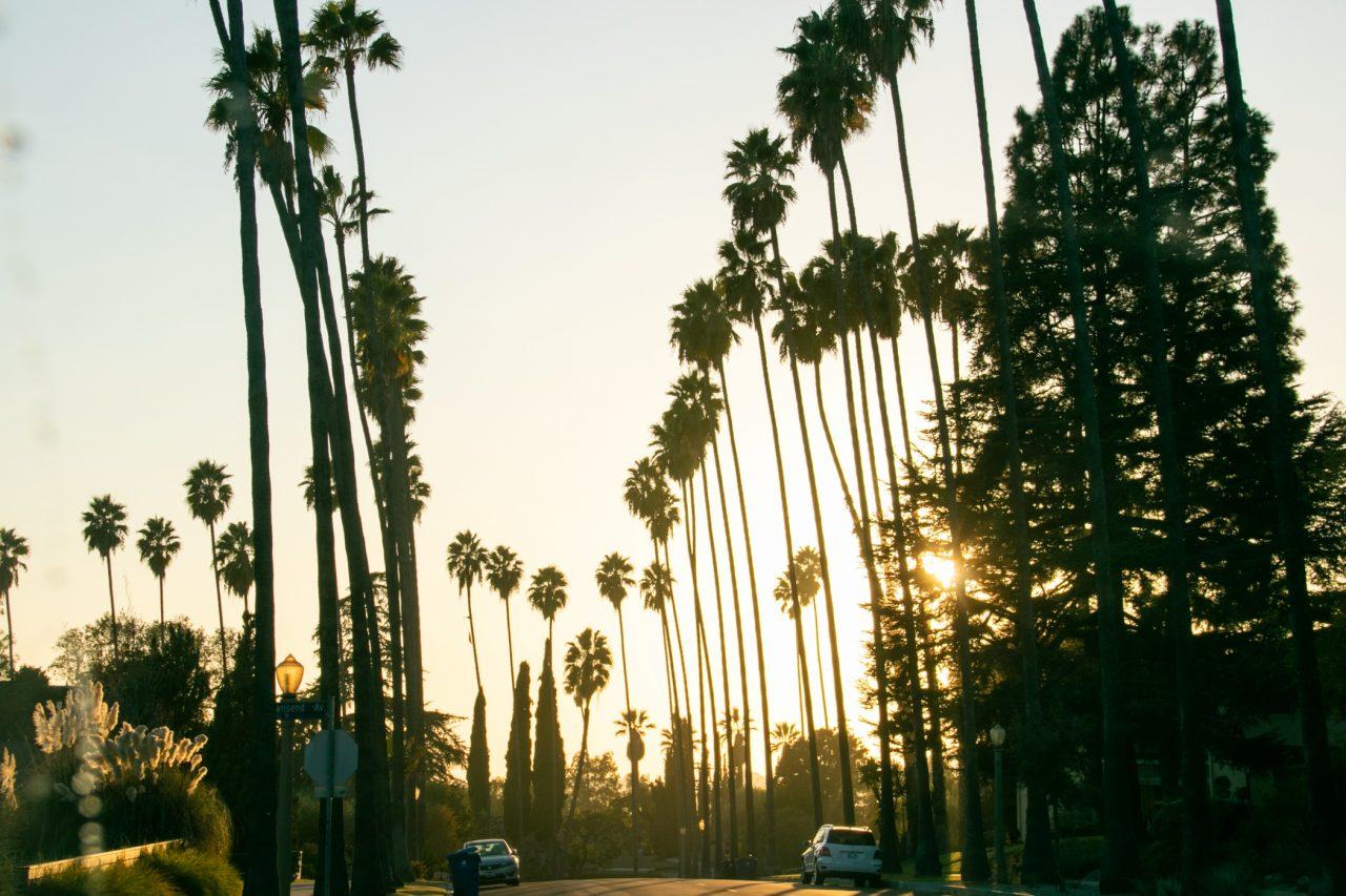 Sun Close To Setting Beyond Palm Trees