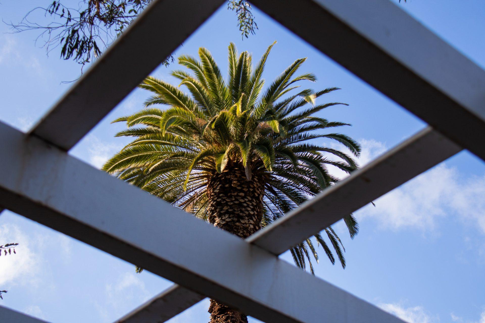 Palm Tree Through Wide Lattice Structure