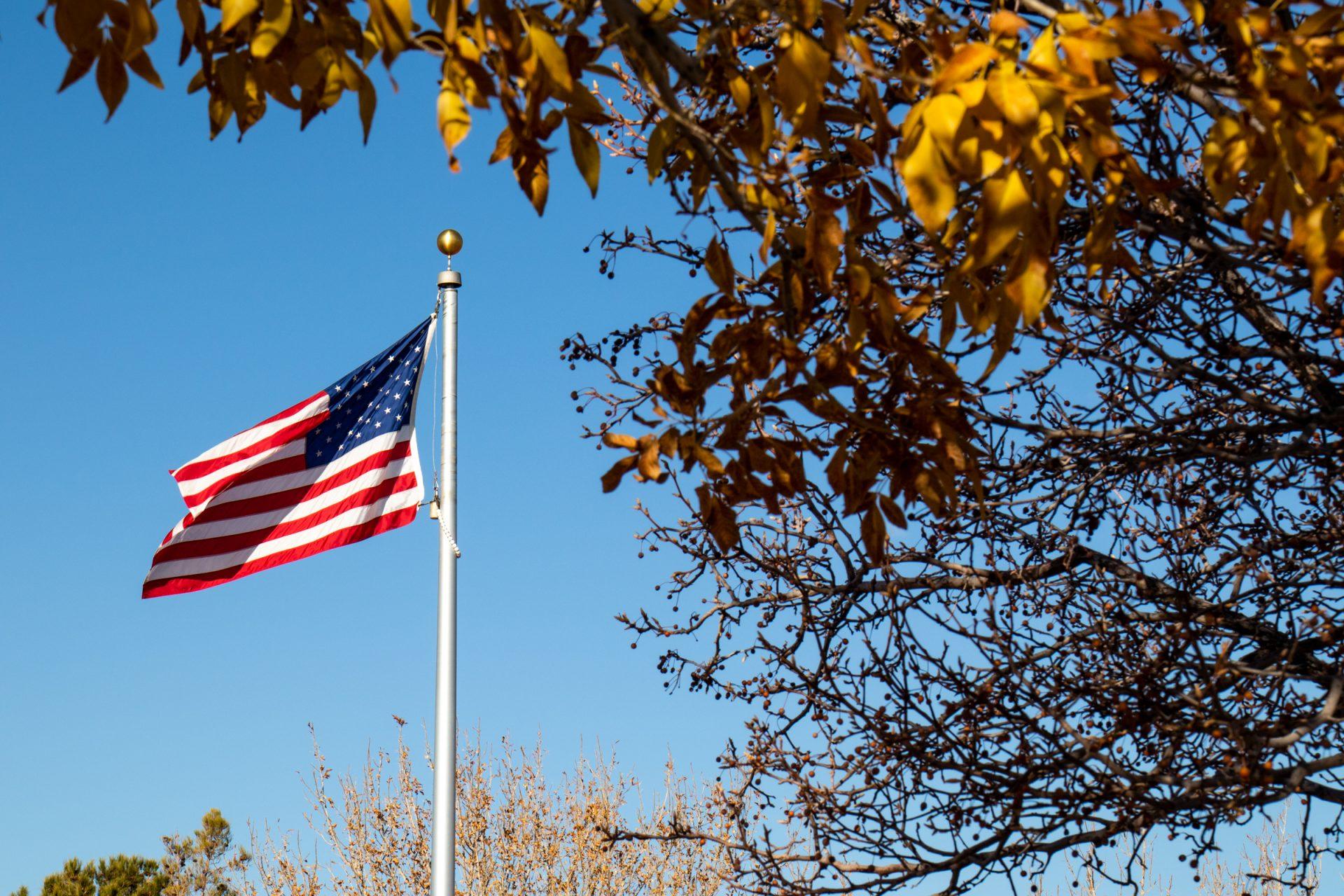 American Flag On Pole Beyond Tree