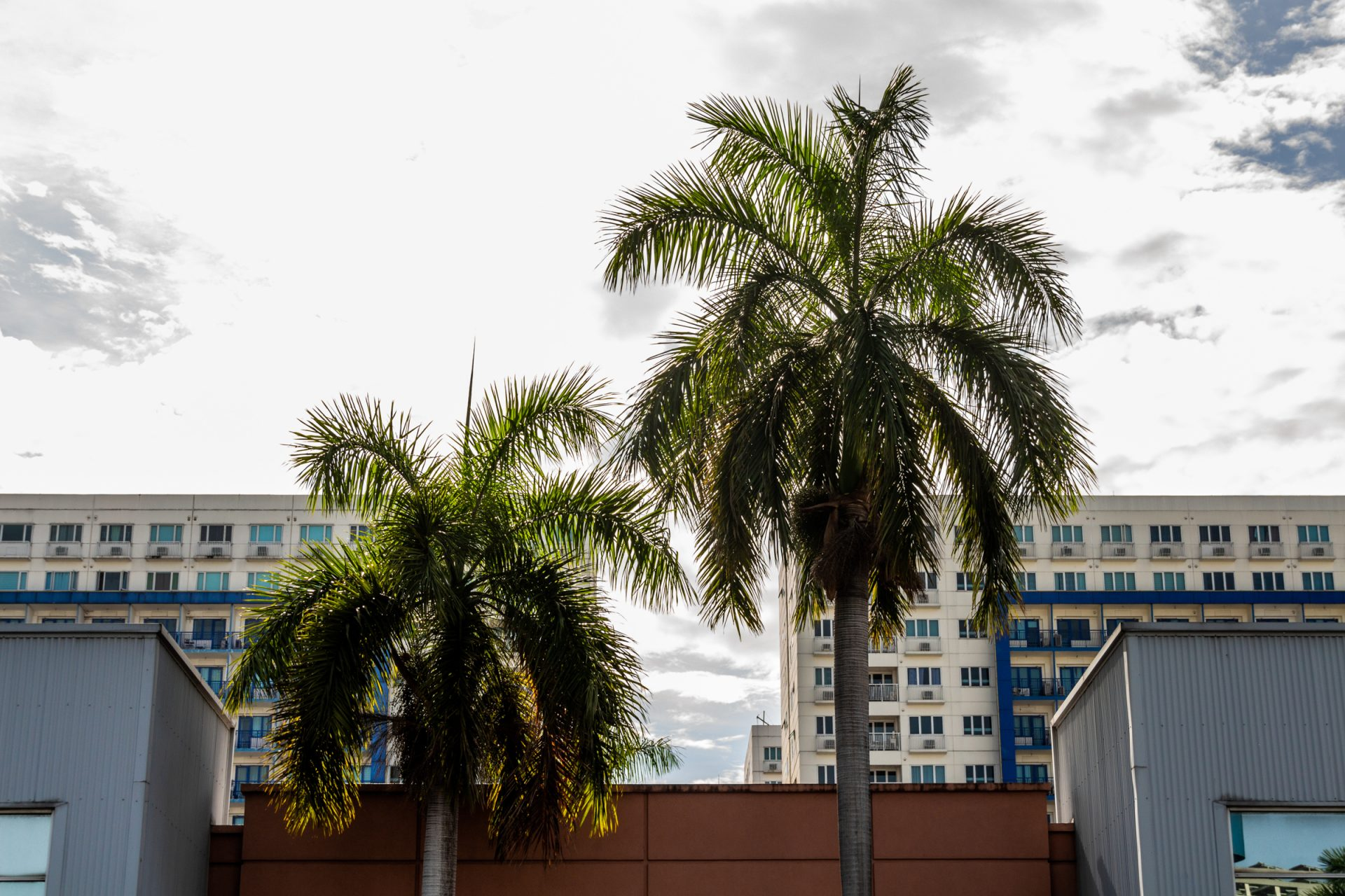 Buildings Behind Two Palm Trees