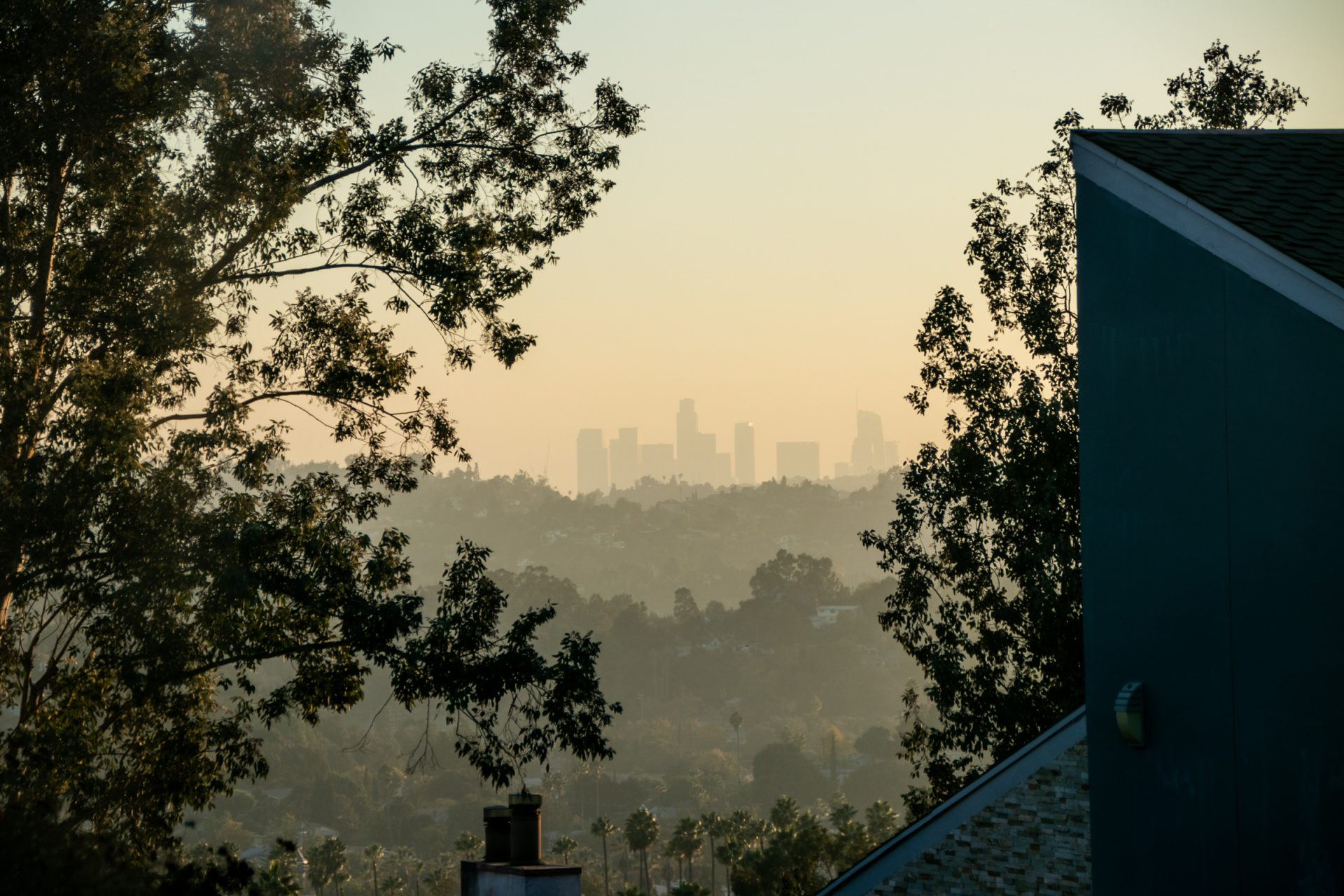 City Skyline Beyond Trees And Building Roofs