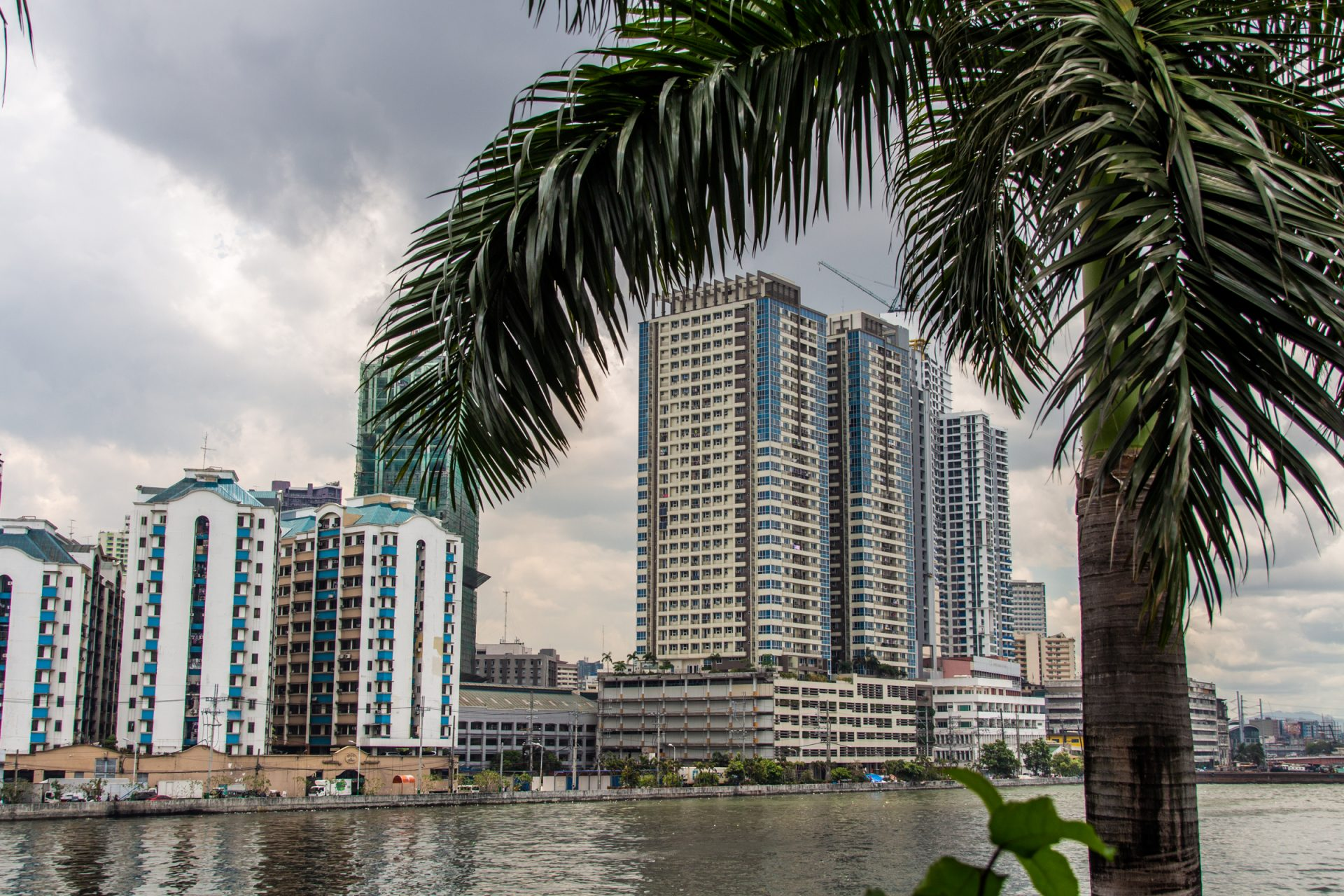 Tall Buildings On Shore Beyond Palm Tree