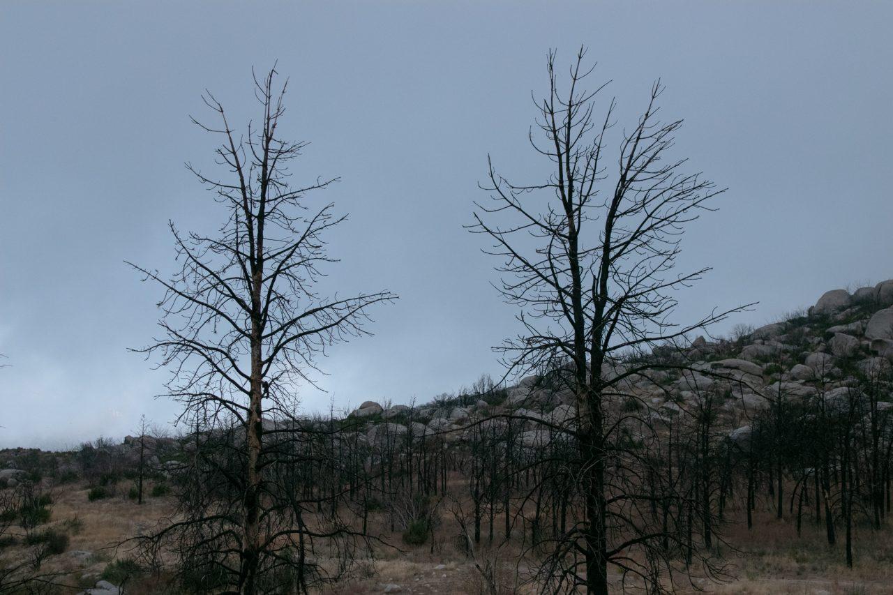 Bare Trees Near Rocks