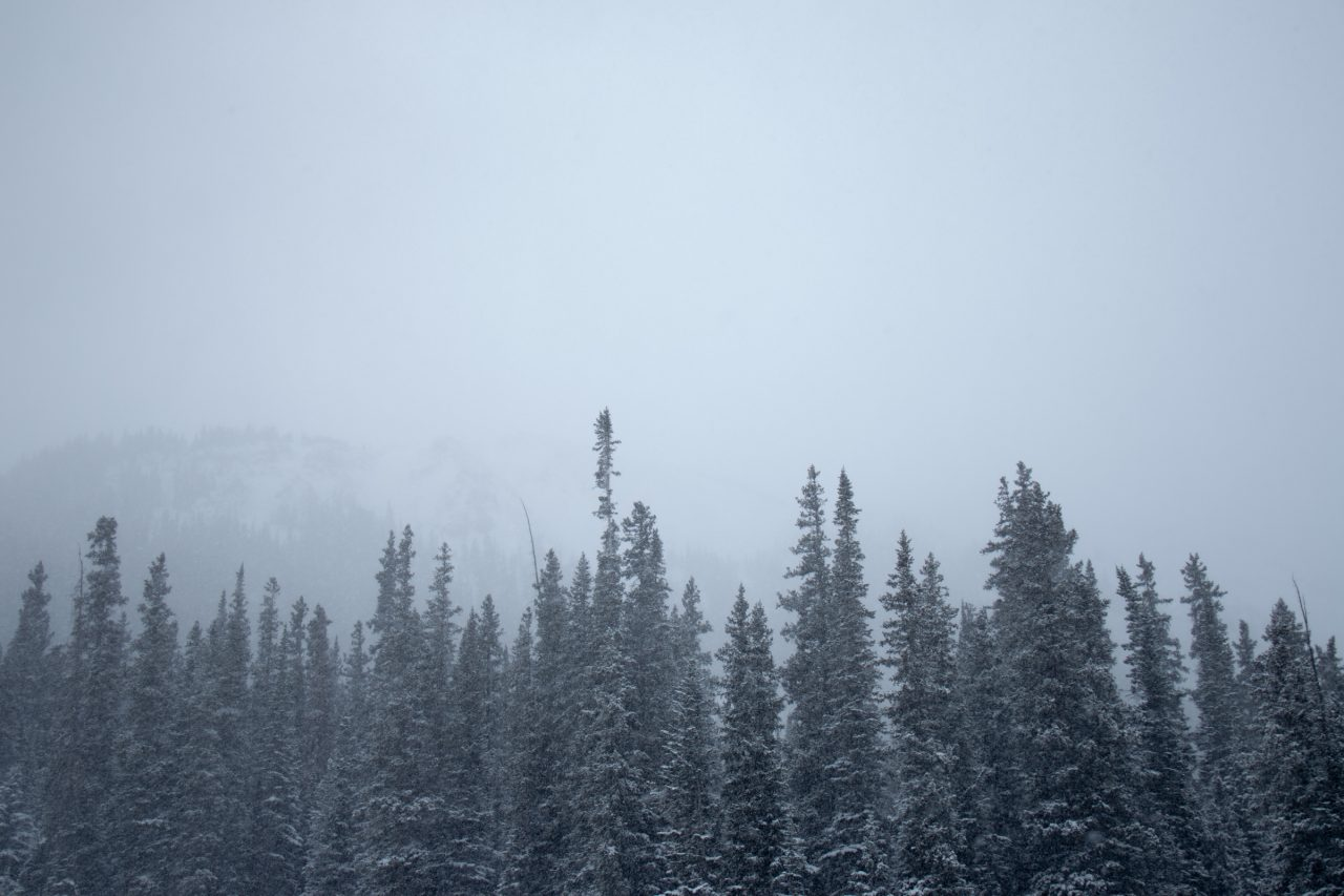 Fog Above Snow Covered Trees