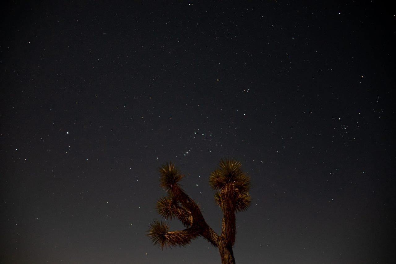 Joshua Tree Against Starry Night Sky