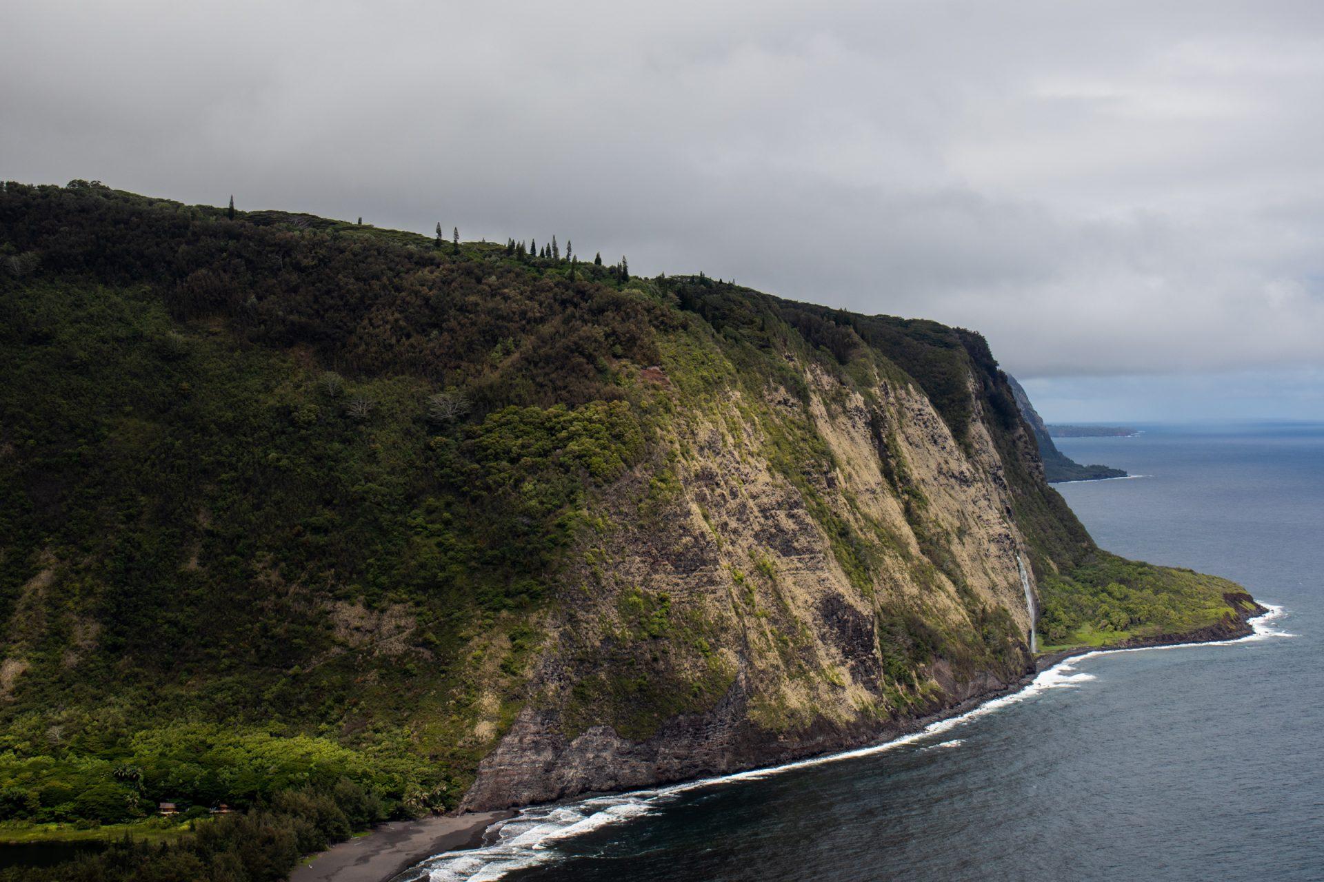 Plants And Trees Near Coastal Cliff