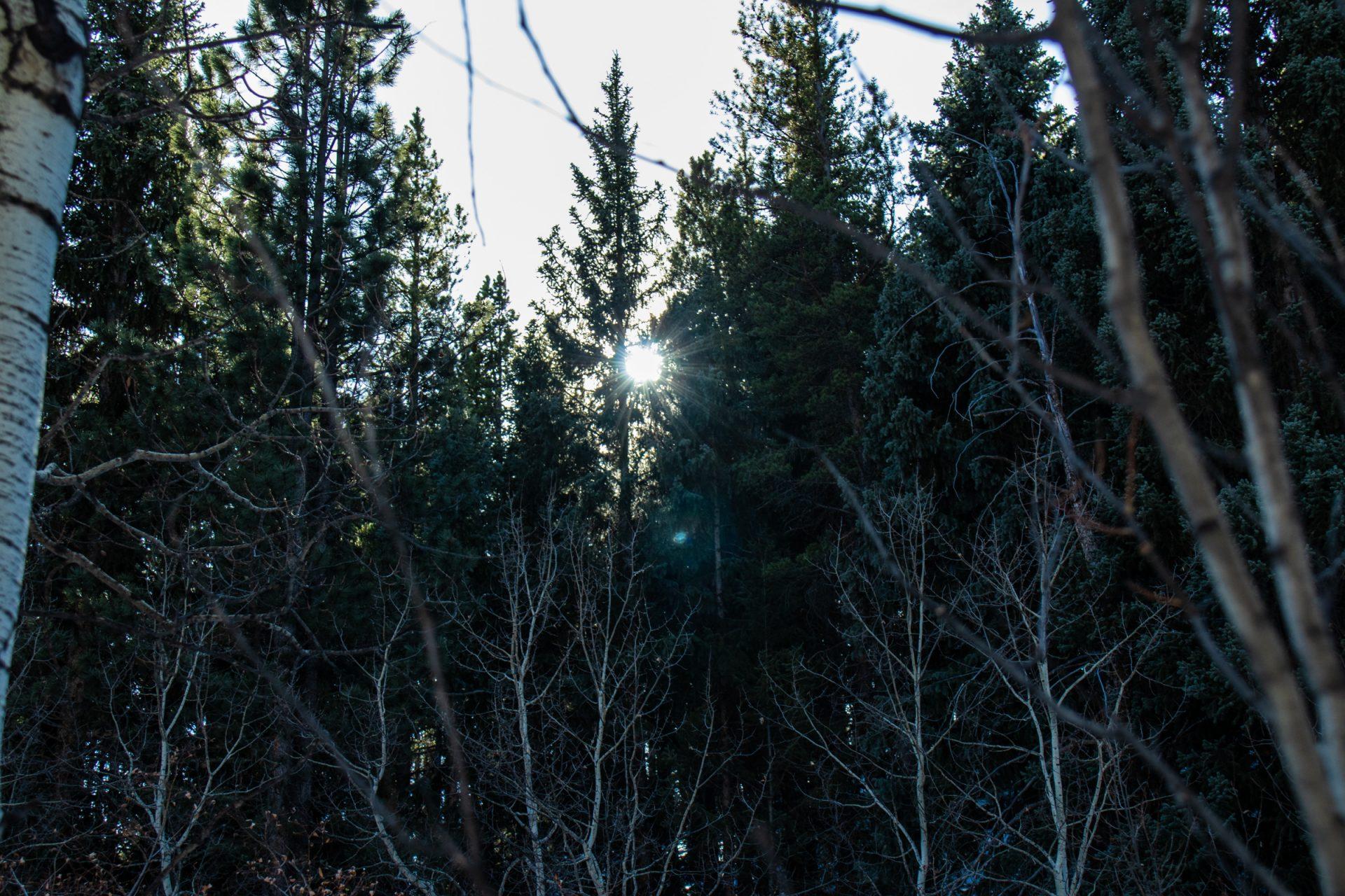 Sun Shining Faintly Through Trees