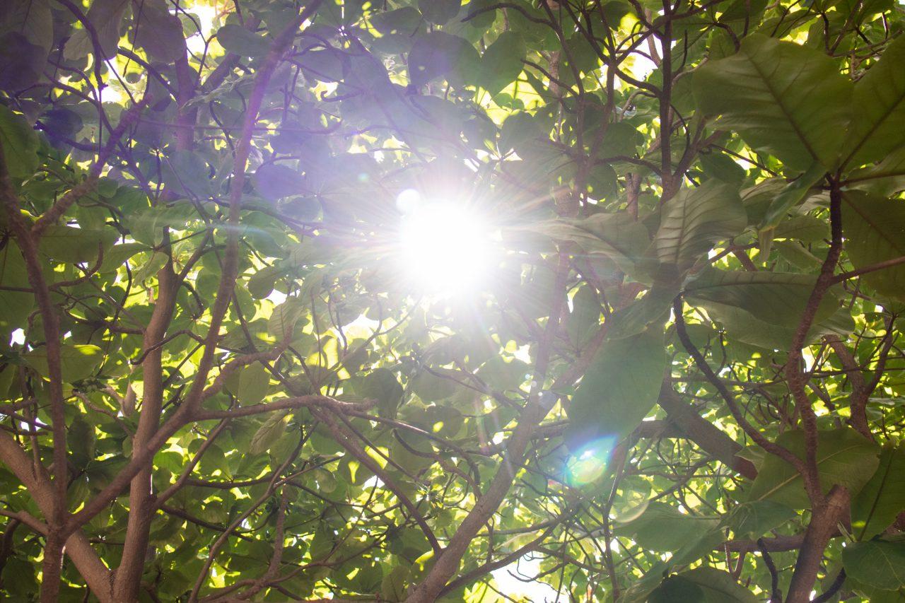 Sun Through Thick Foliage