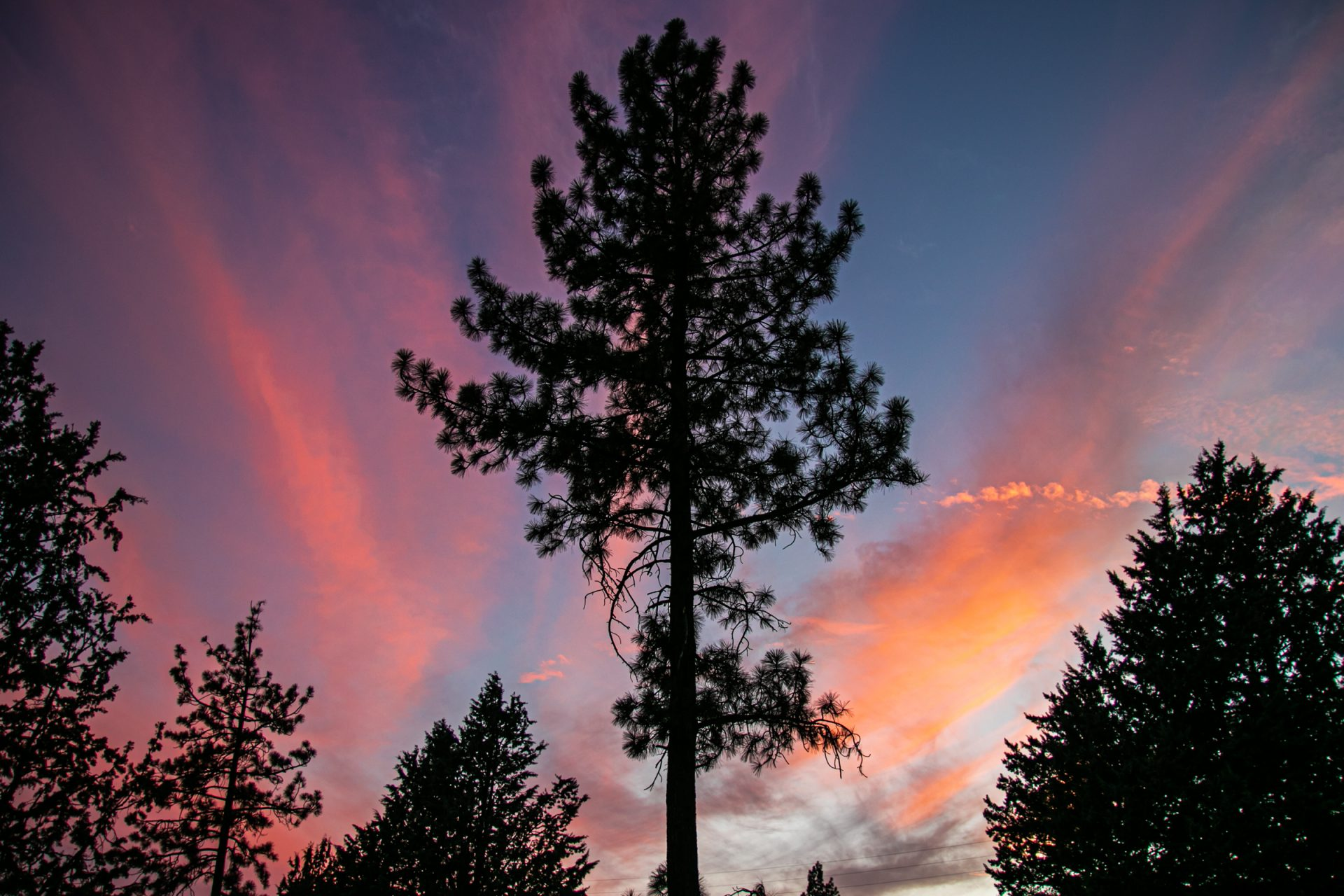 Sunset Colored Clouds Behind Tall Tree