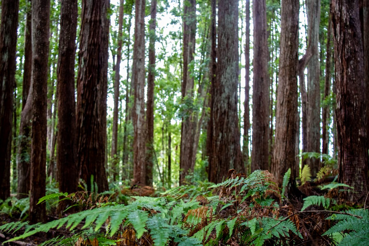 Wild Plants Between Tree Trunks