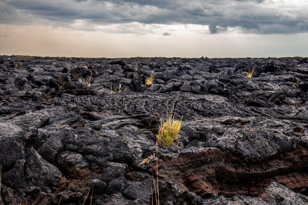 Wild Plants On Dark Rocks