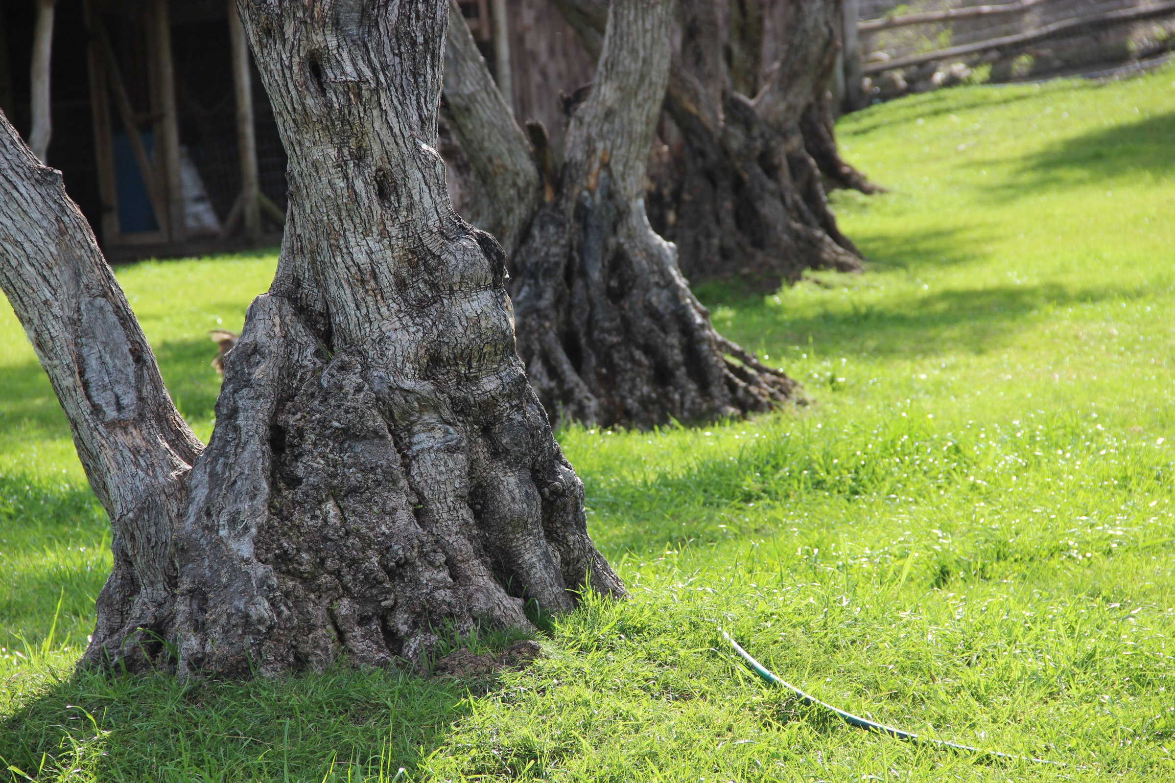 Tree Trunks on Green Grass