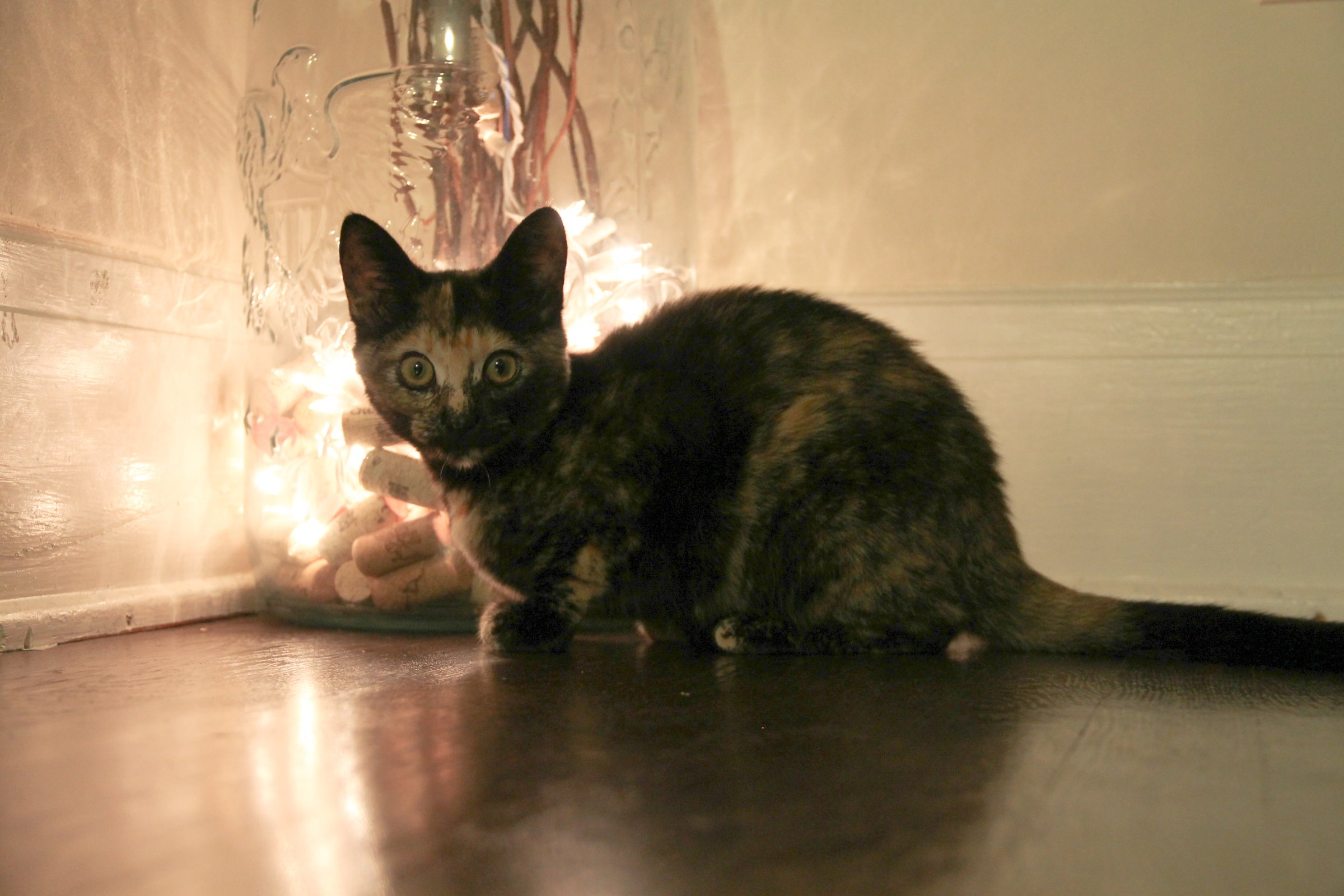 Cat Crouching on Floor by Jar with Lights