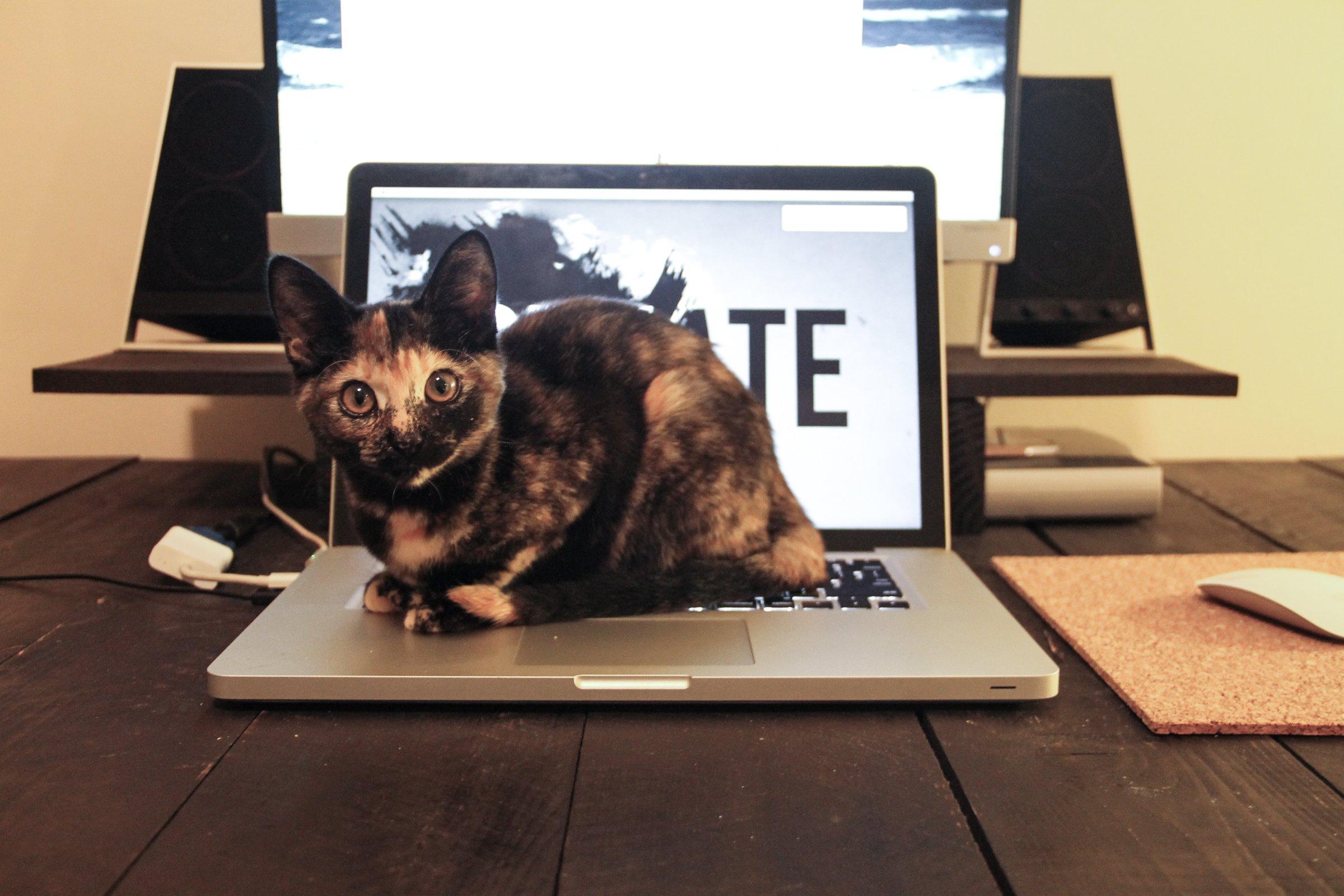 Cat Crouching on Laptop