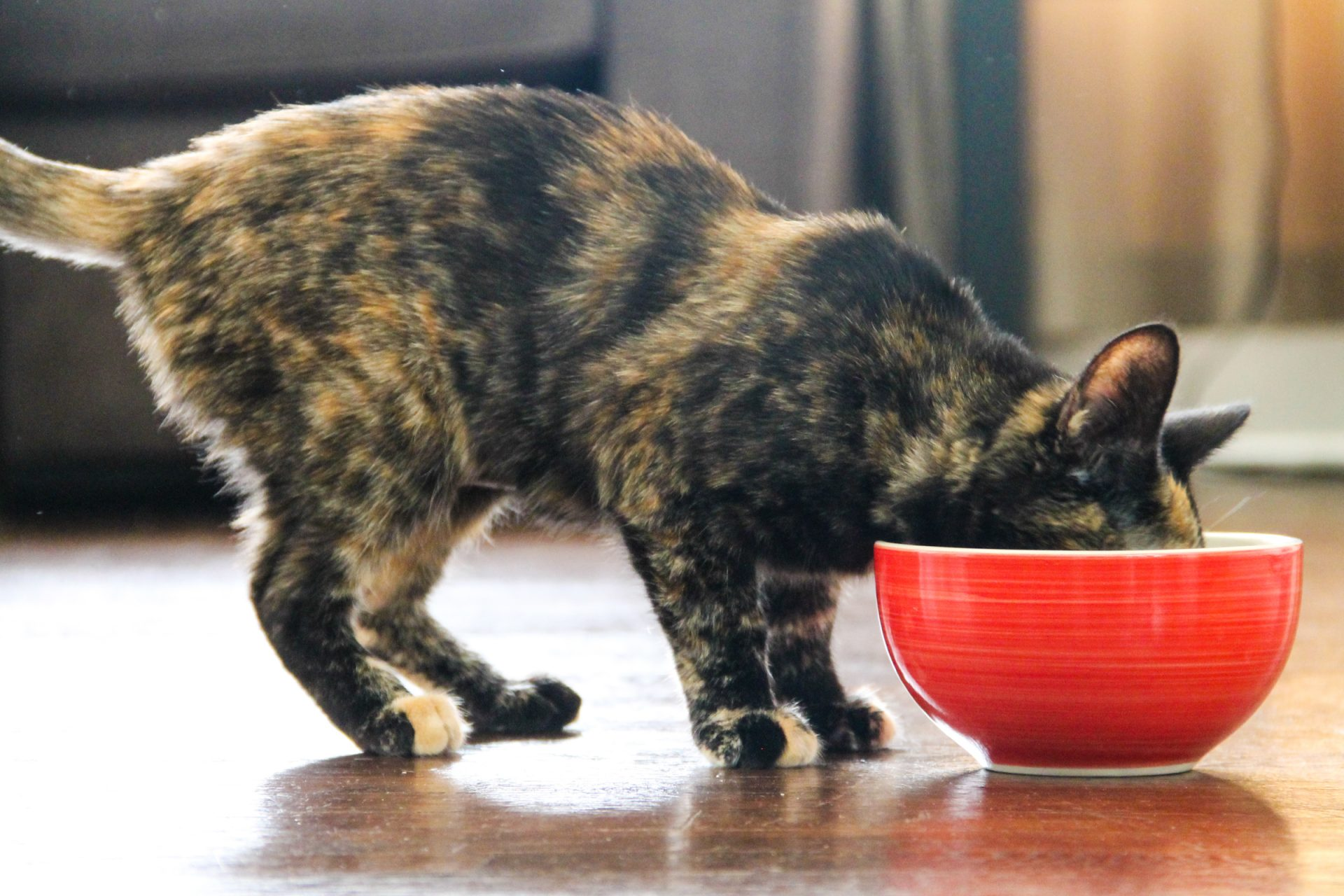 Cat Eating Out of Red Bowl
