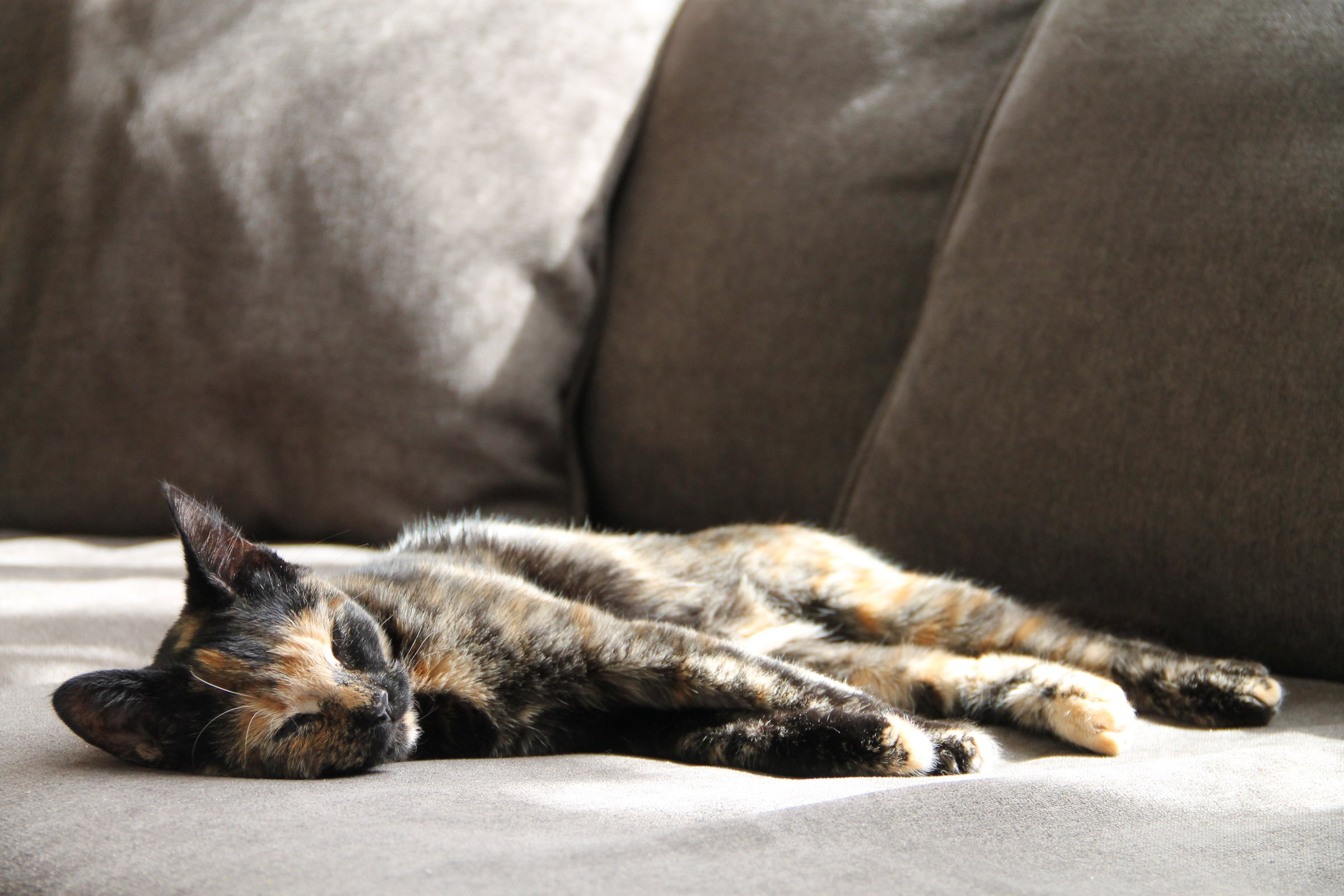 Cat Napping on Sofa in the Sun