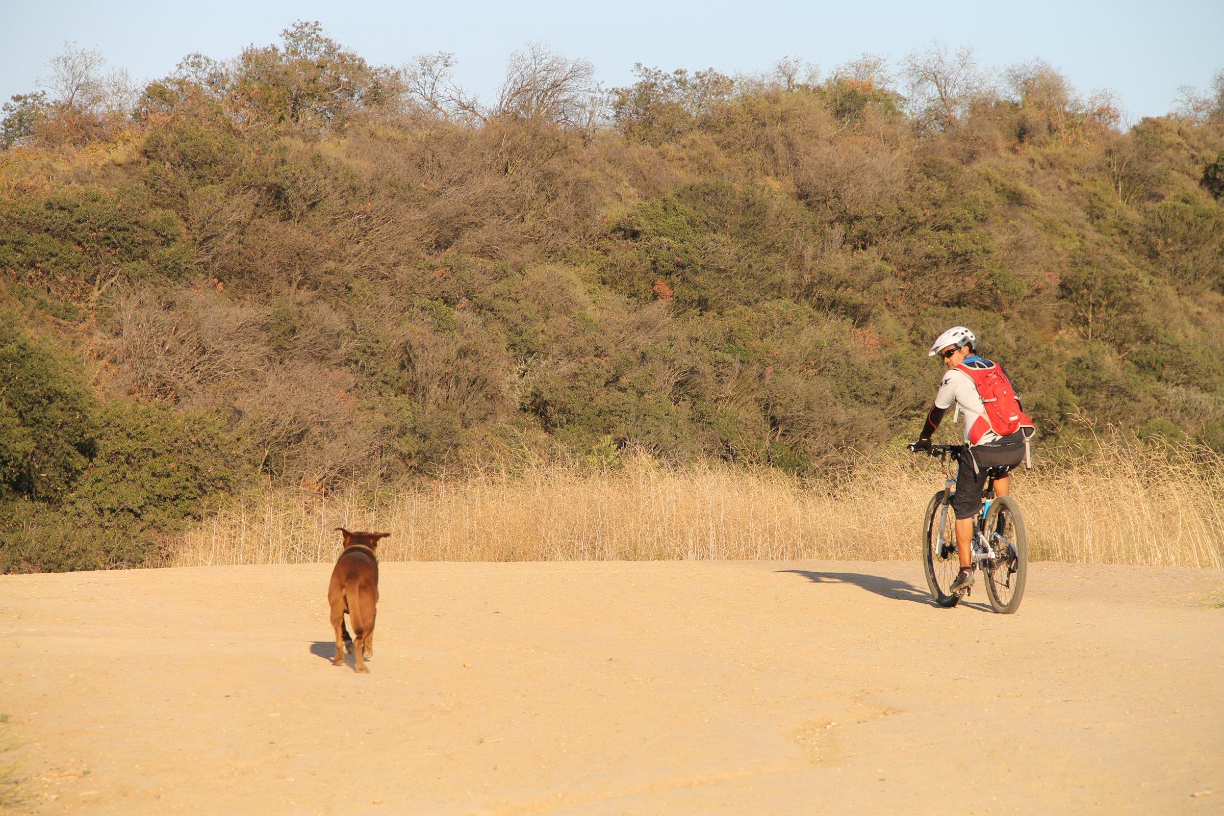 Cyclist Riding Next to Dog