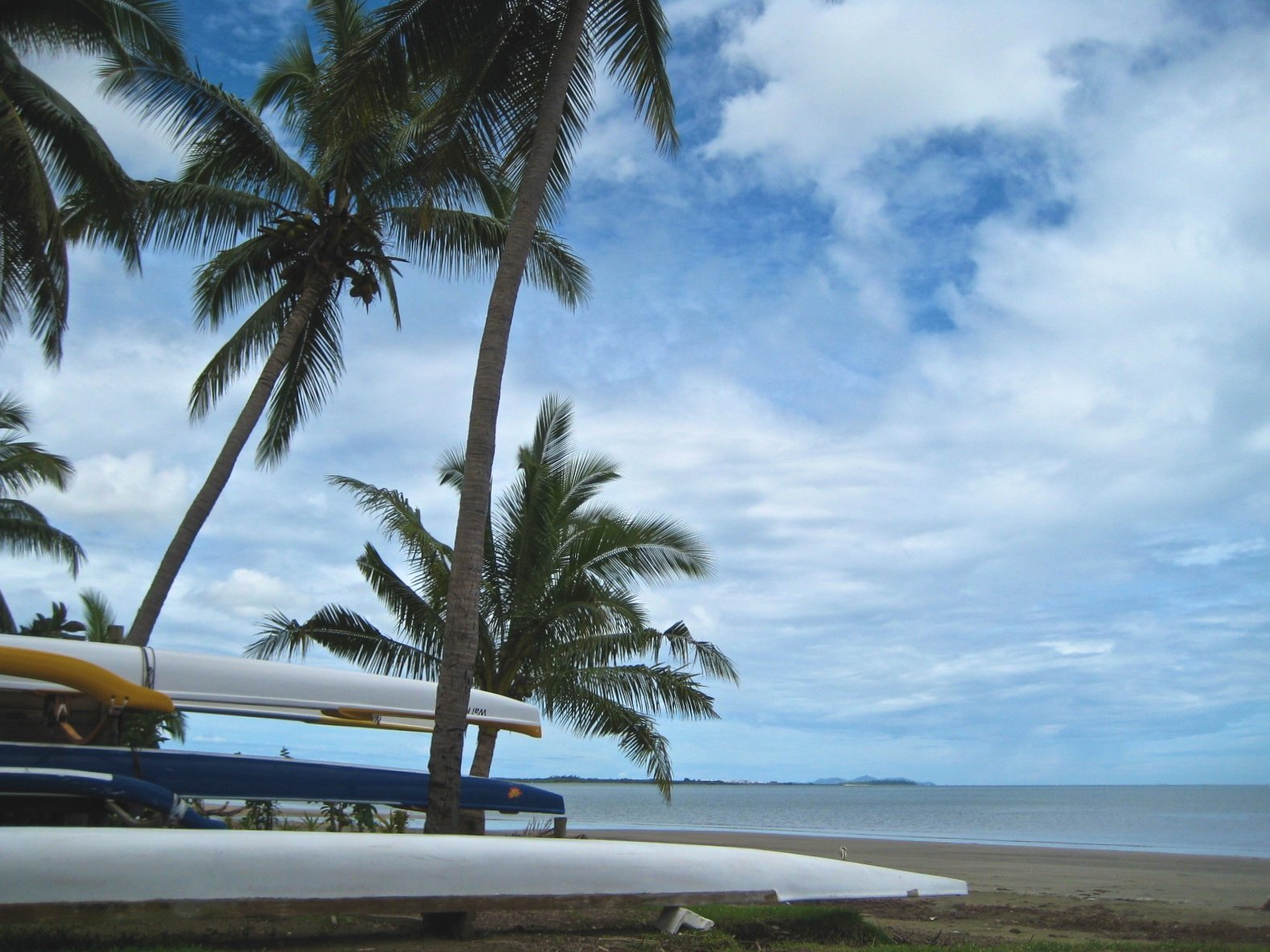 Palm Trees & Canoes on Beach