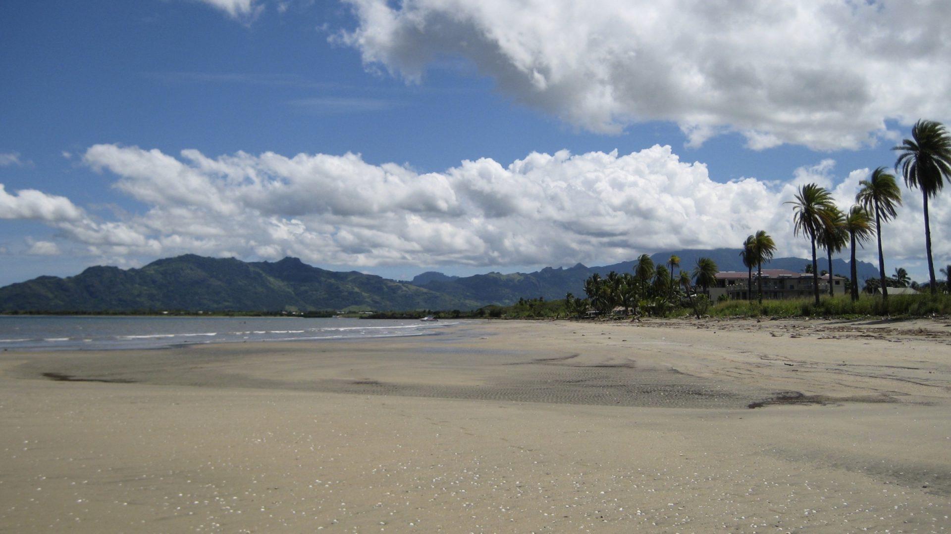 Palm Trees on Tropical Sandy Beach