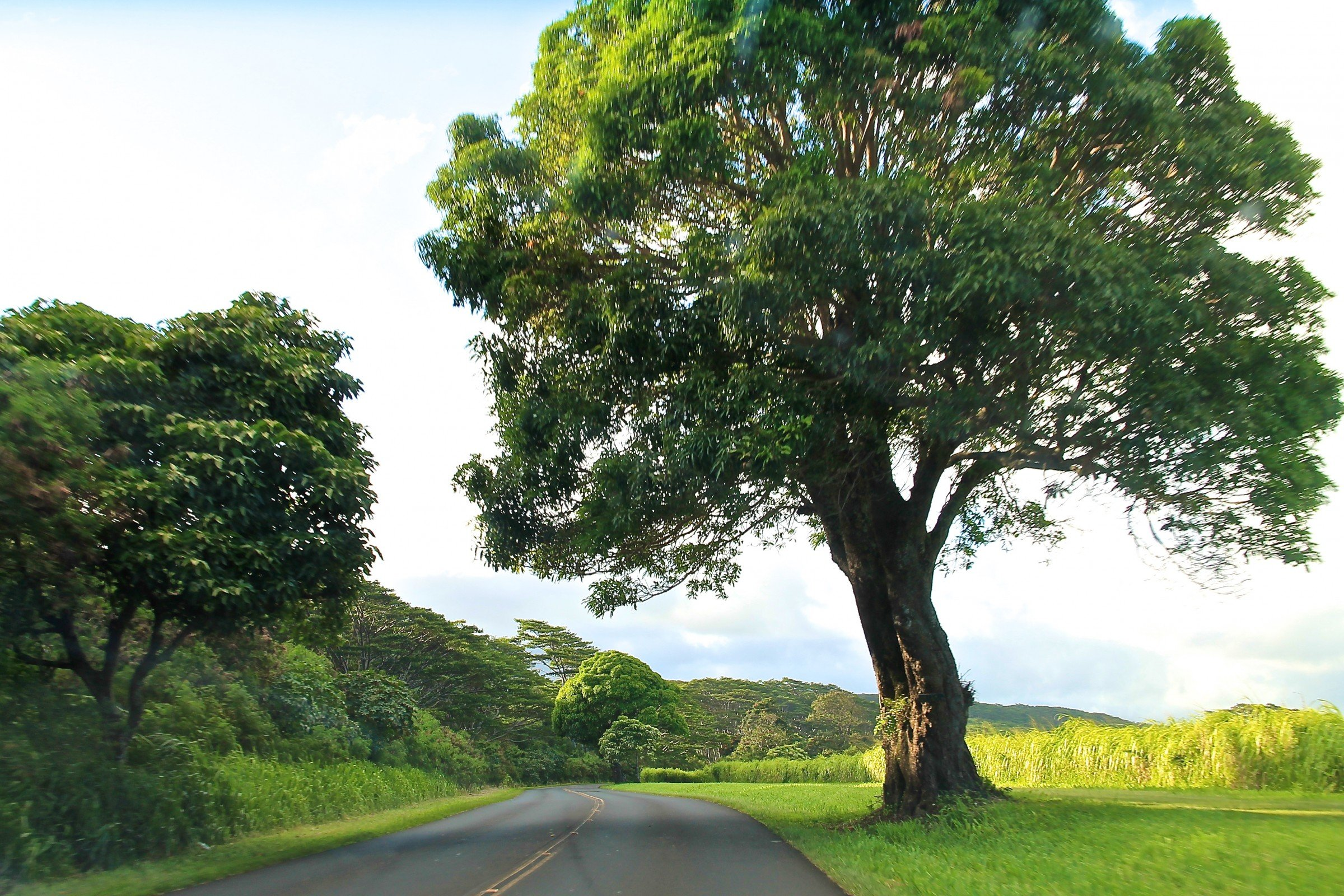 free stock photo of road by large tree