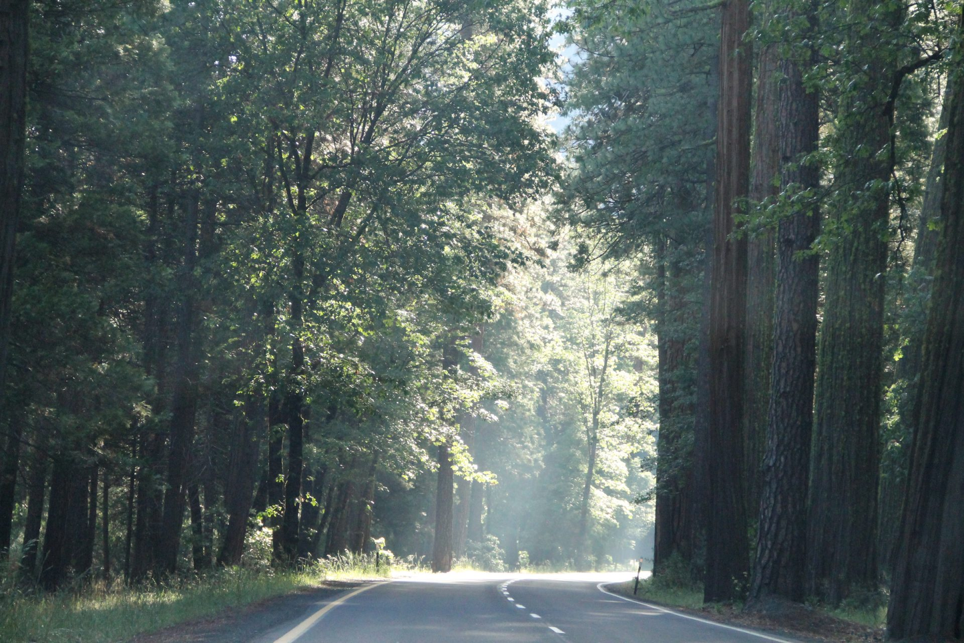 Road Through Trees in the Forest