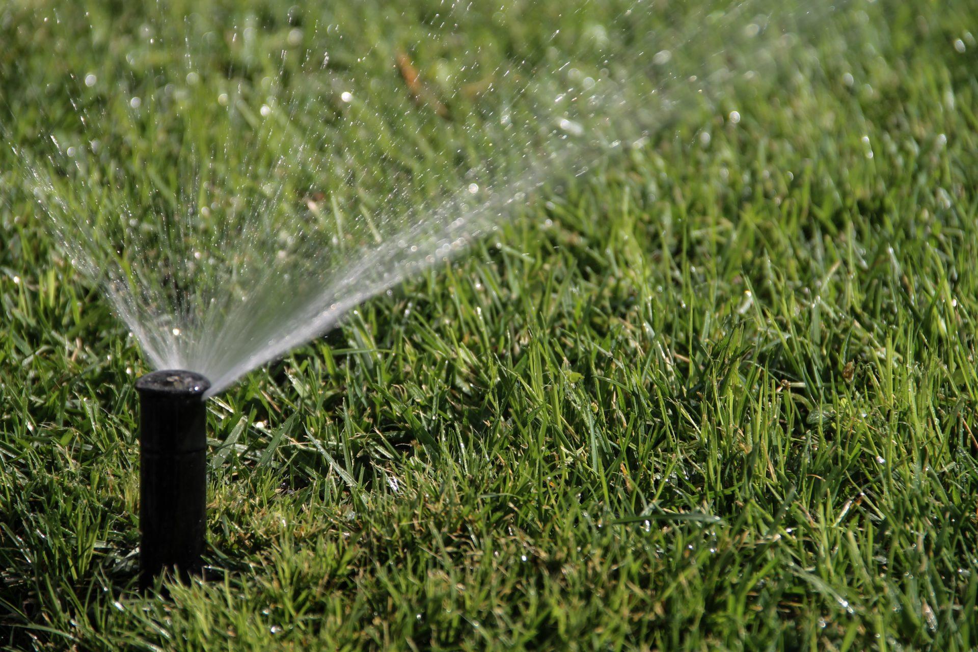 Sprinkler Watering Green Grass