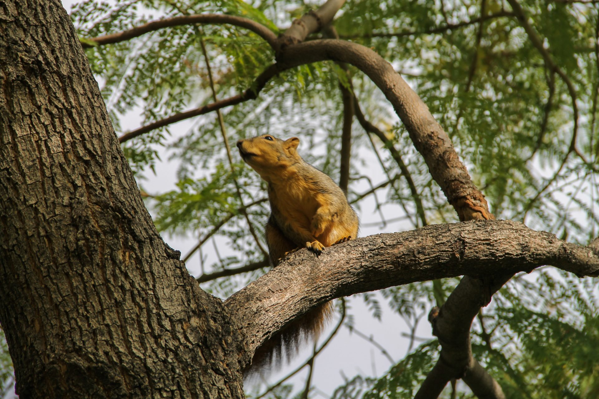Squirrel on a Branch in a Tree