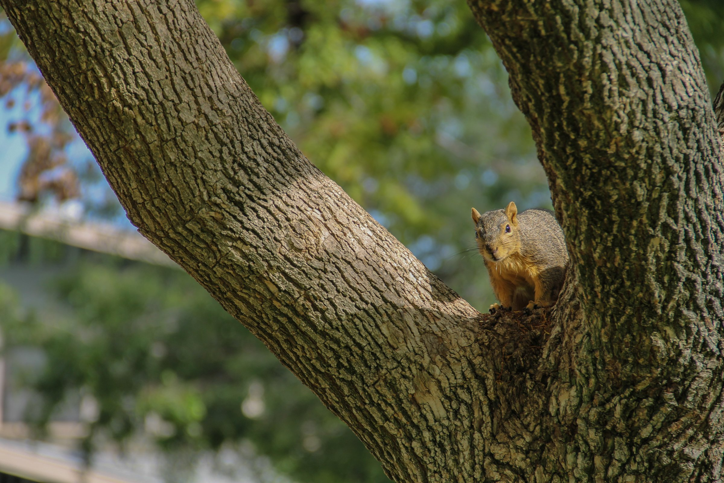 Squirrel Sitting on Tree Branch
