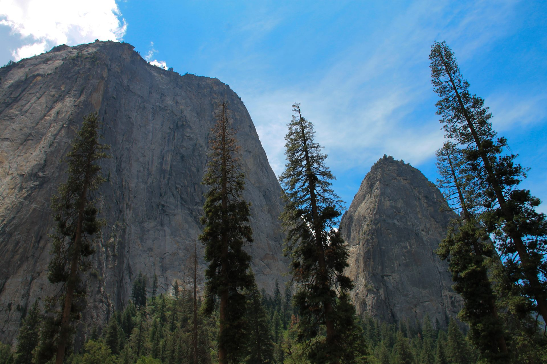 Tall Trees in Front of Rock Mountain