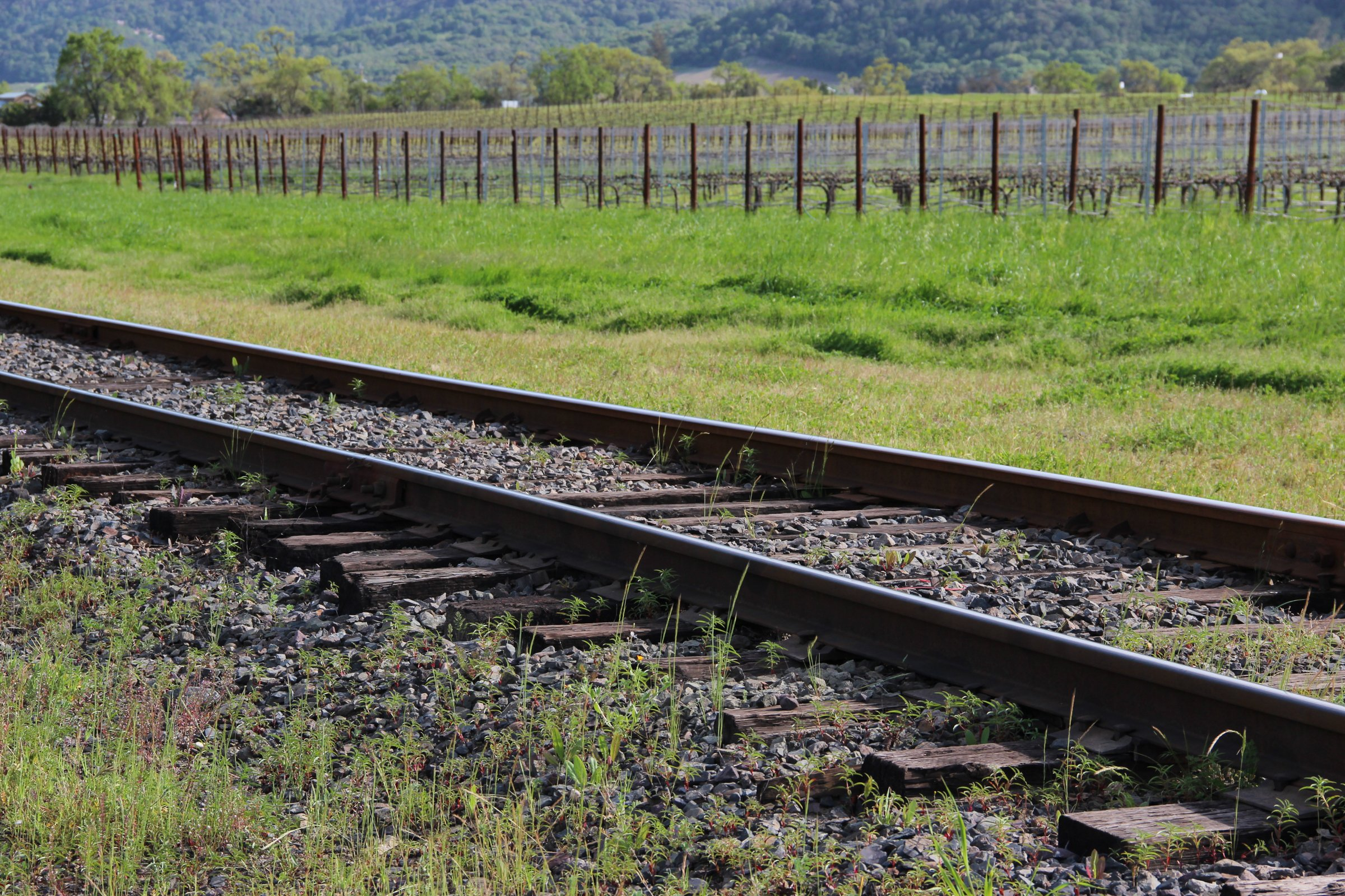 Train Tracks by Vineyards