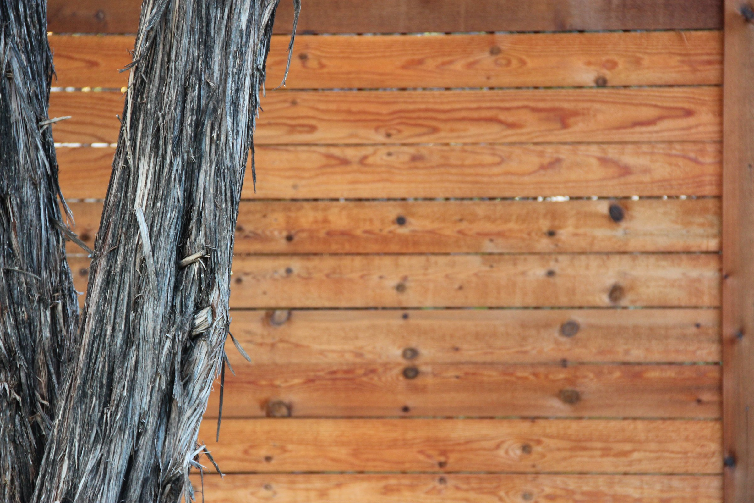 Free stock photo of tree trunk in front of wood board fence tree trunk in front of wood board fence baanklon Gallery