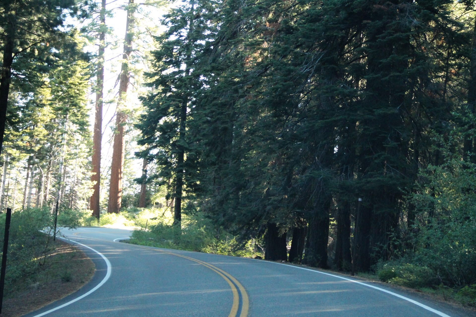 Winding Road Through Trees in Forest