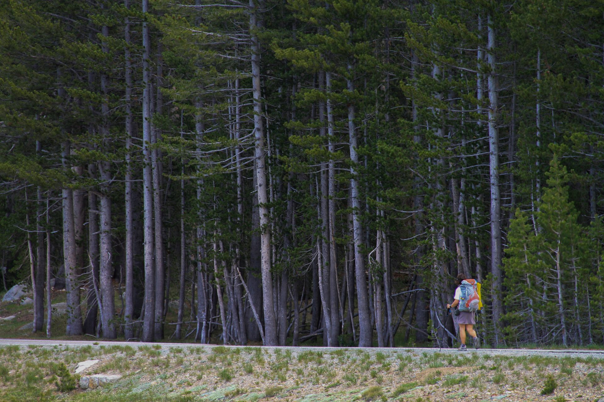 Woman Walking on Road by Forest